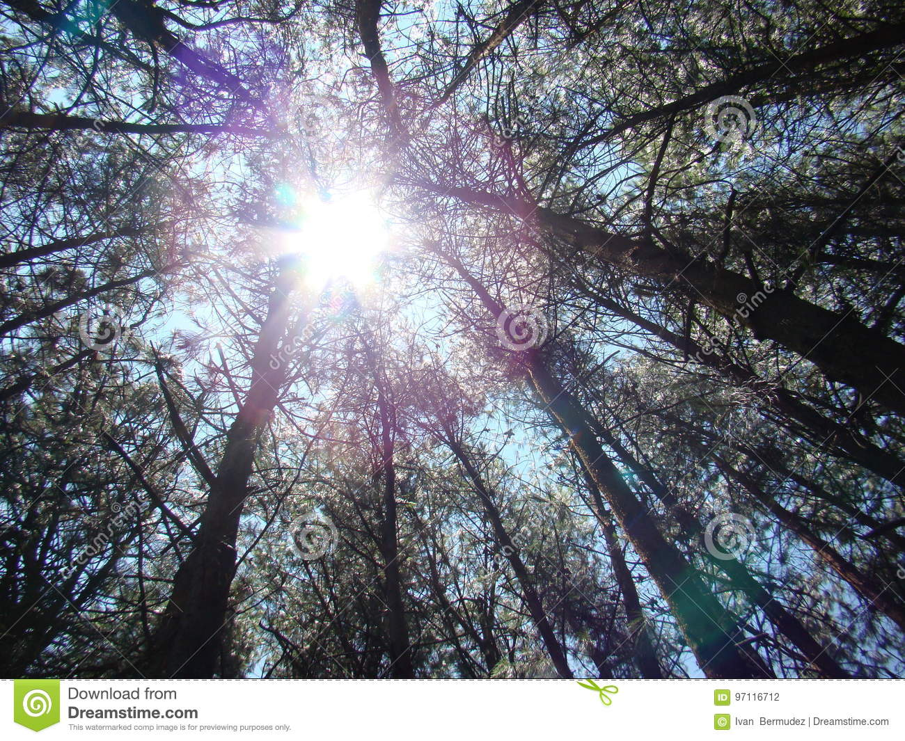 Brightness between the tops of trees