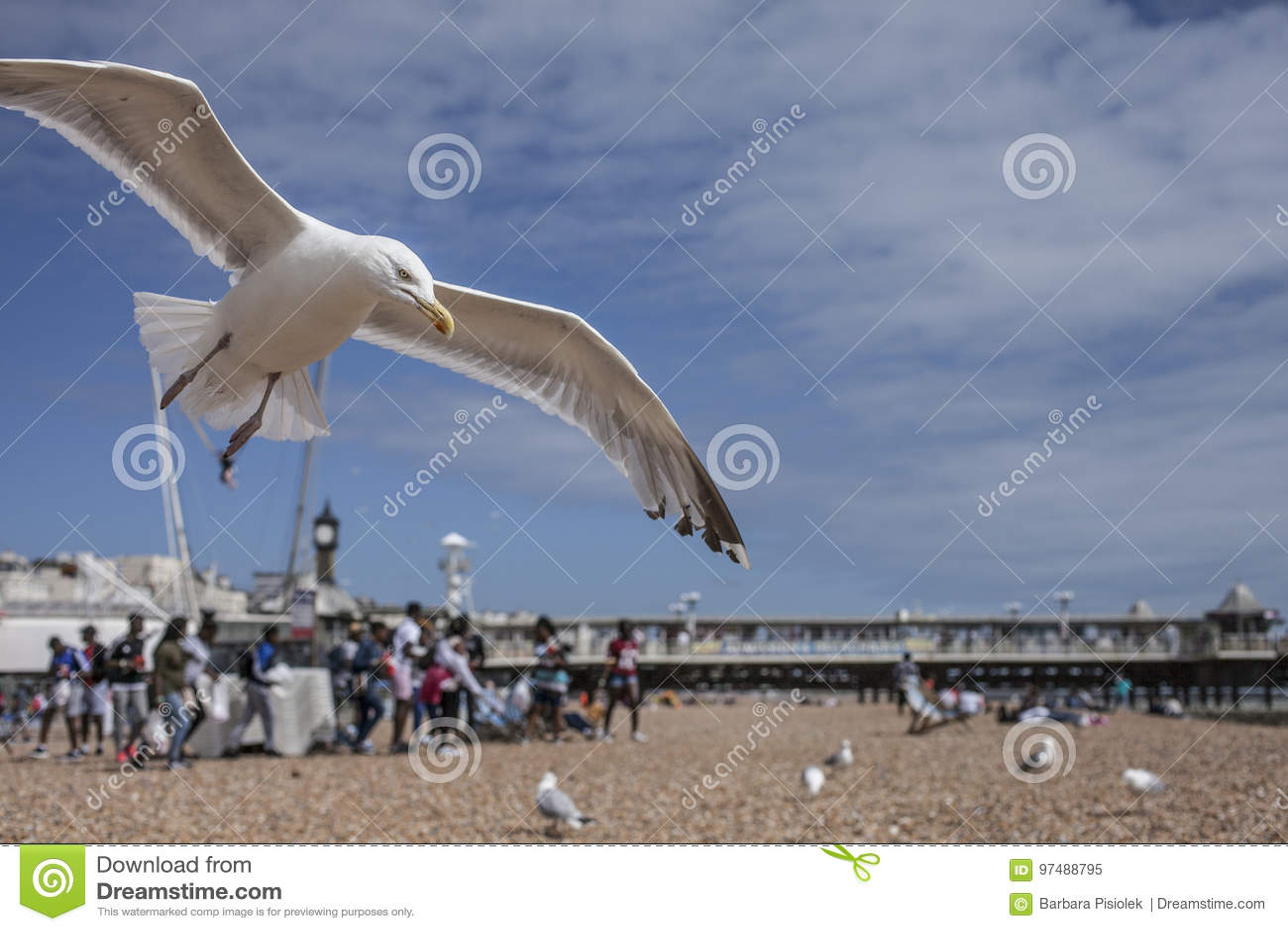 Brighton, beach, seagulls.