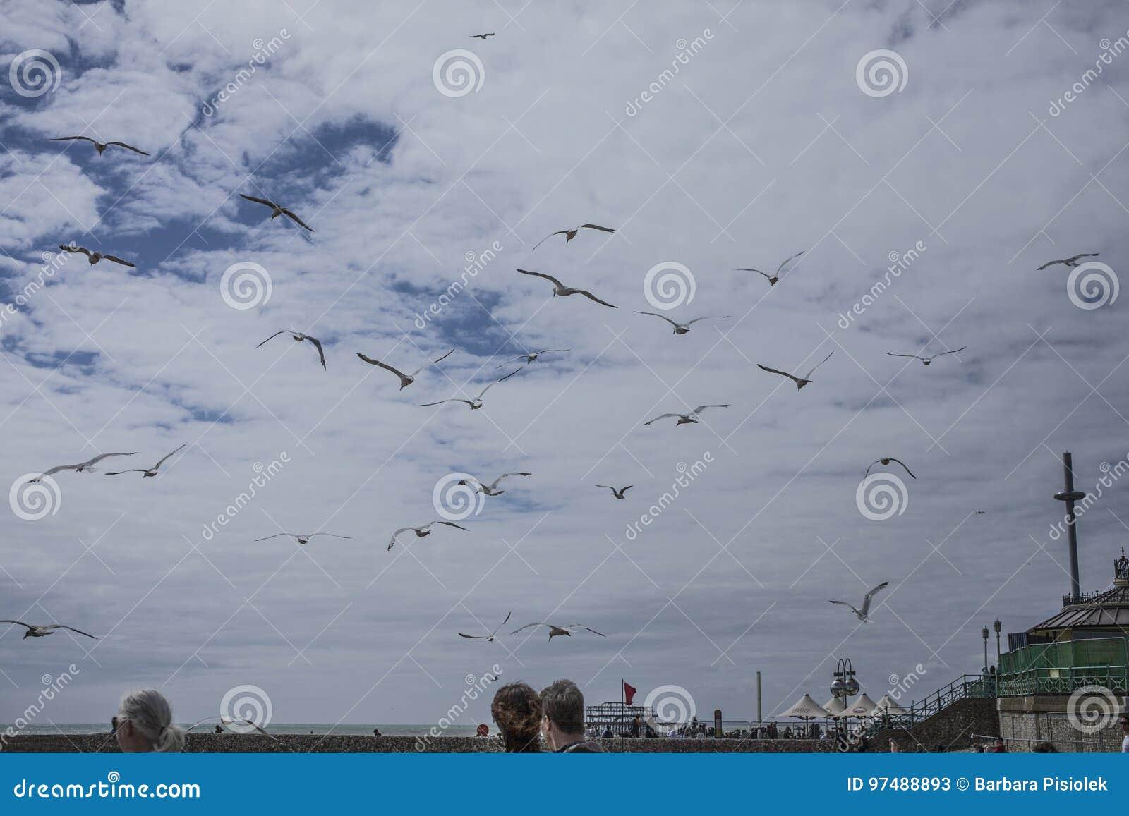 Brighton, Inghilterra - gabbiani nell aria