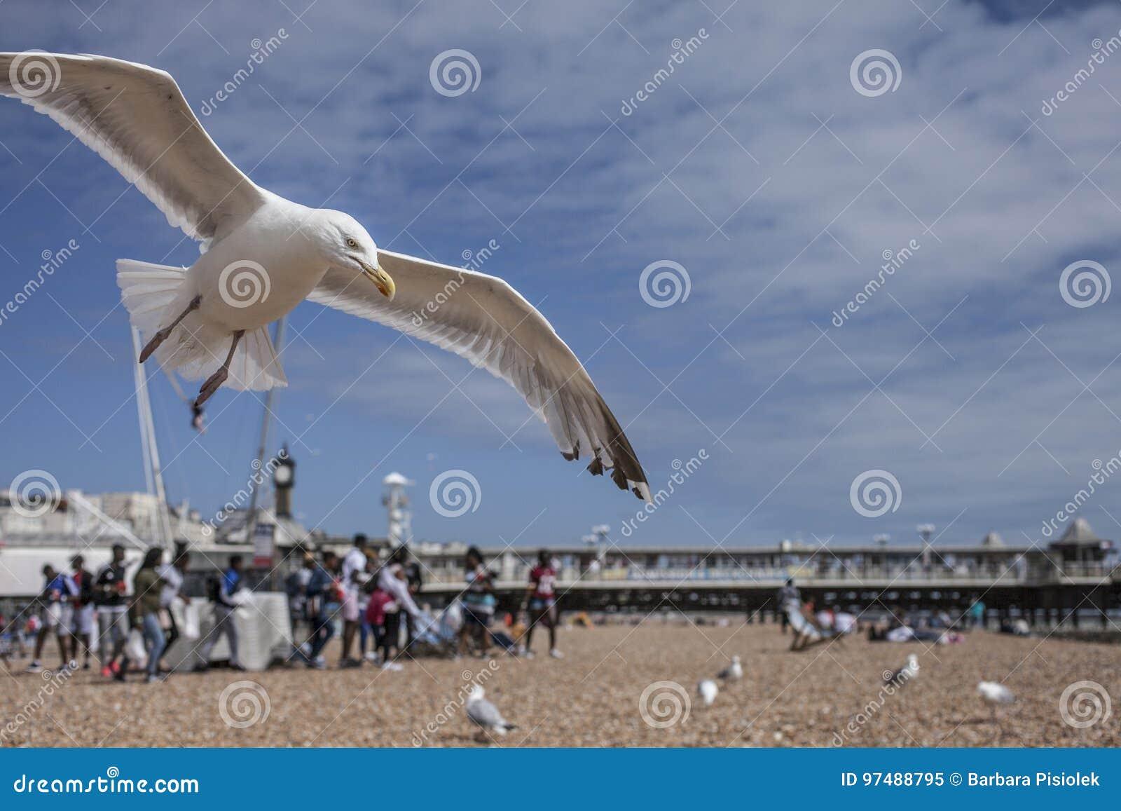 Brighton, playa, gaviotas
