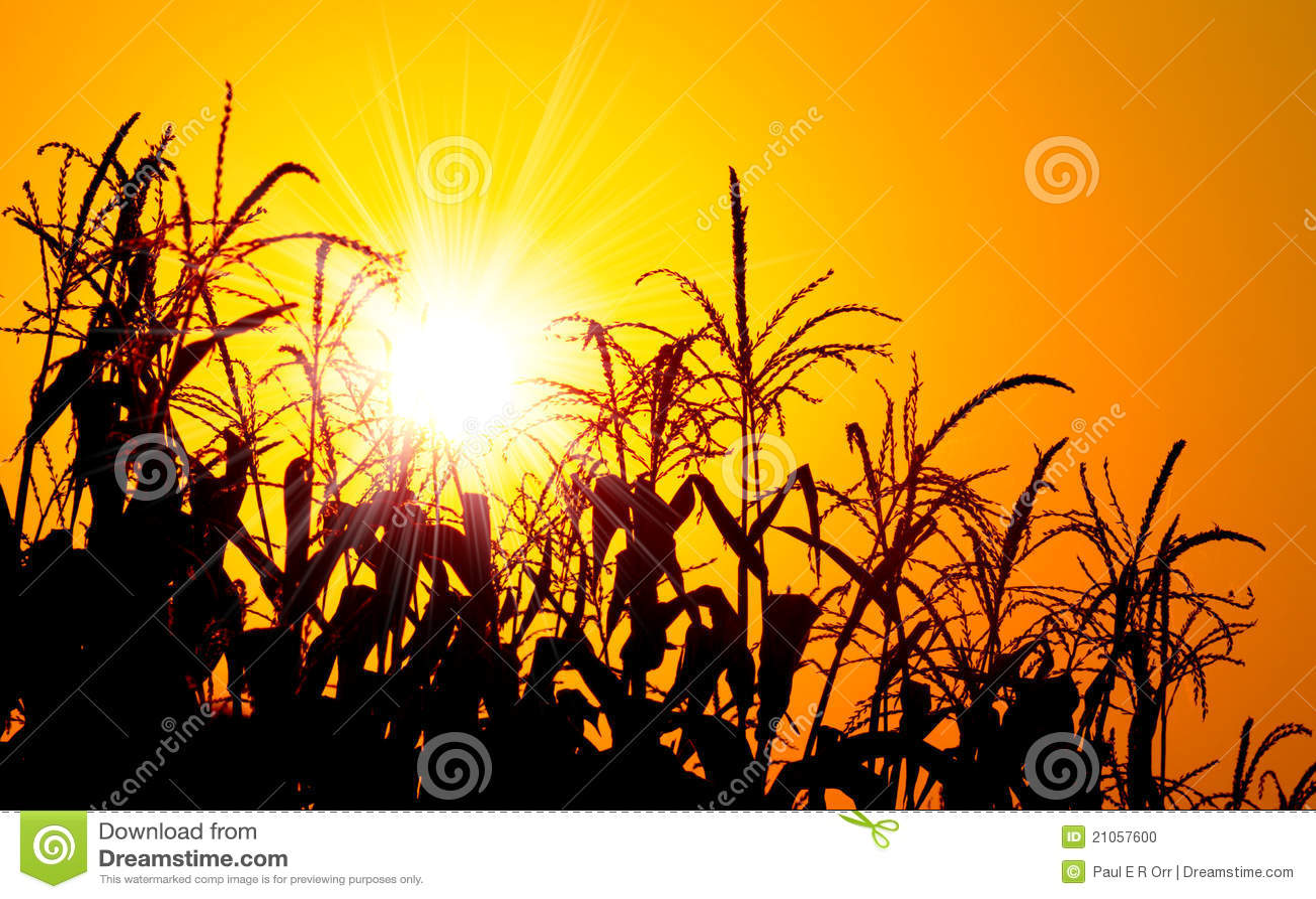 Briljant havrefältorange över soluppgång