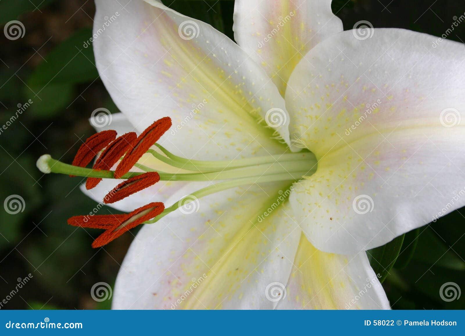 Download Brillant fin photo stock. Image du macro, floral, fleur - 58022