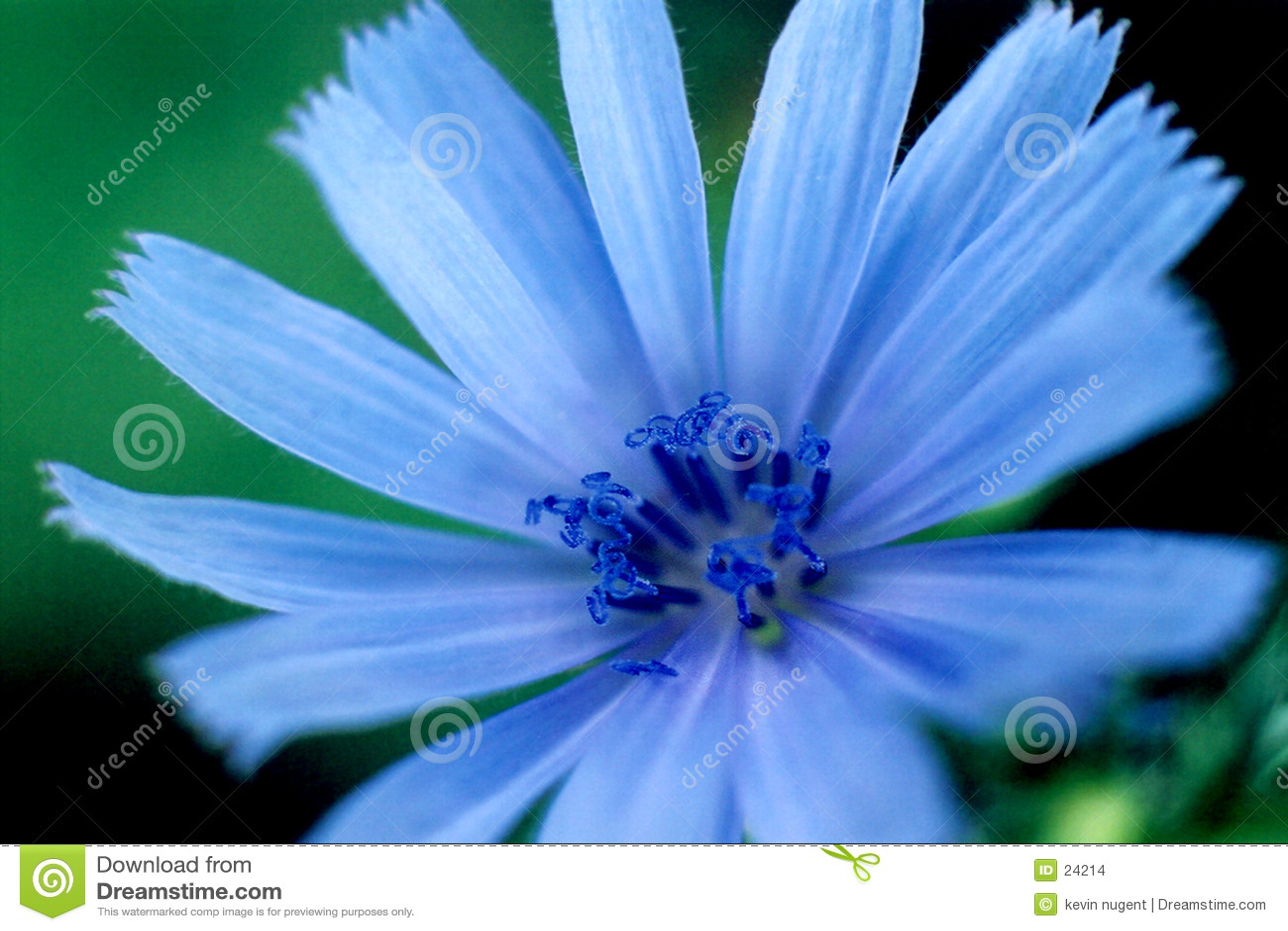 Brillantez azul