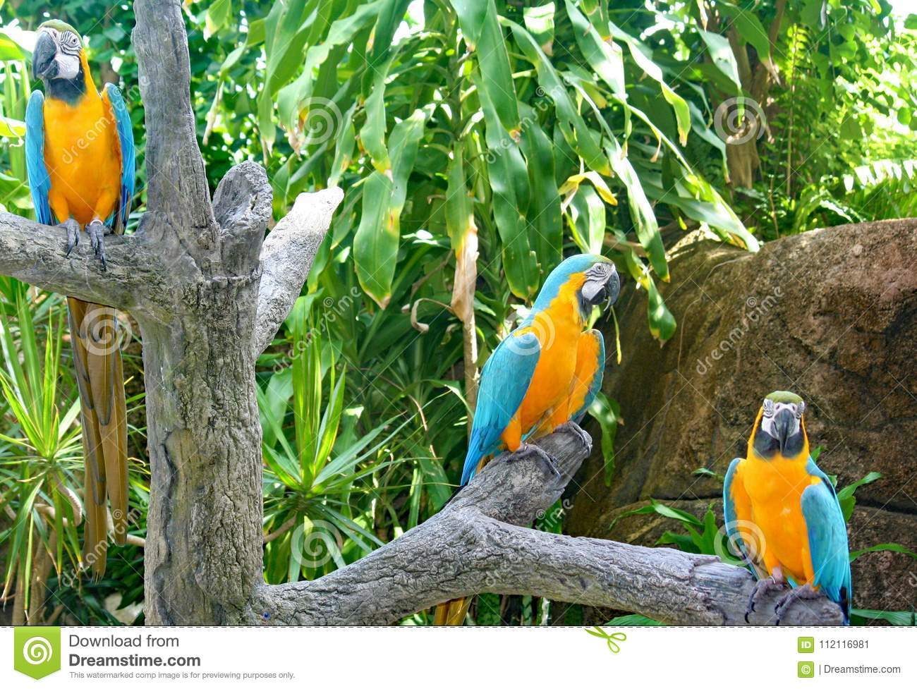 Download Parrots At Moody Gardens In Galveston Stock Image   Image Of Moody,  Galveston: