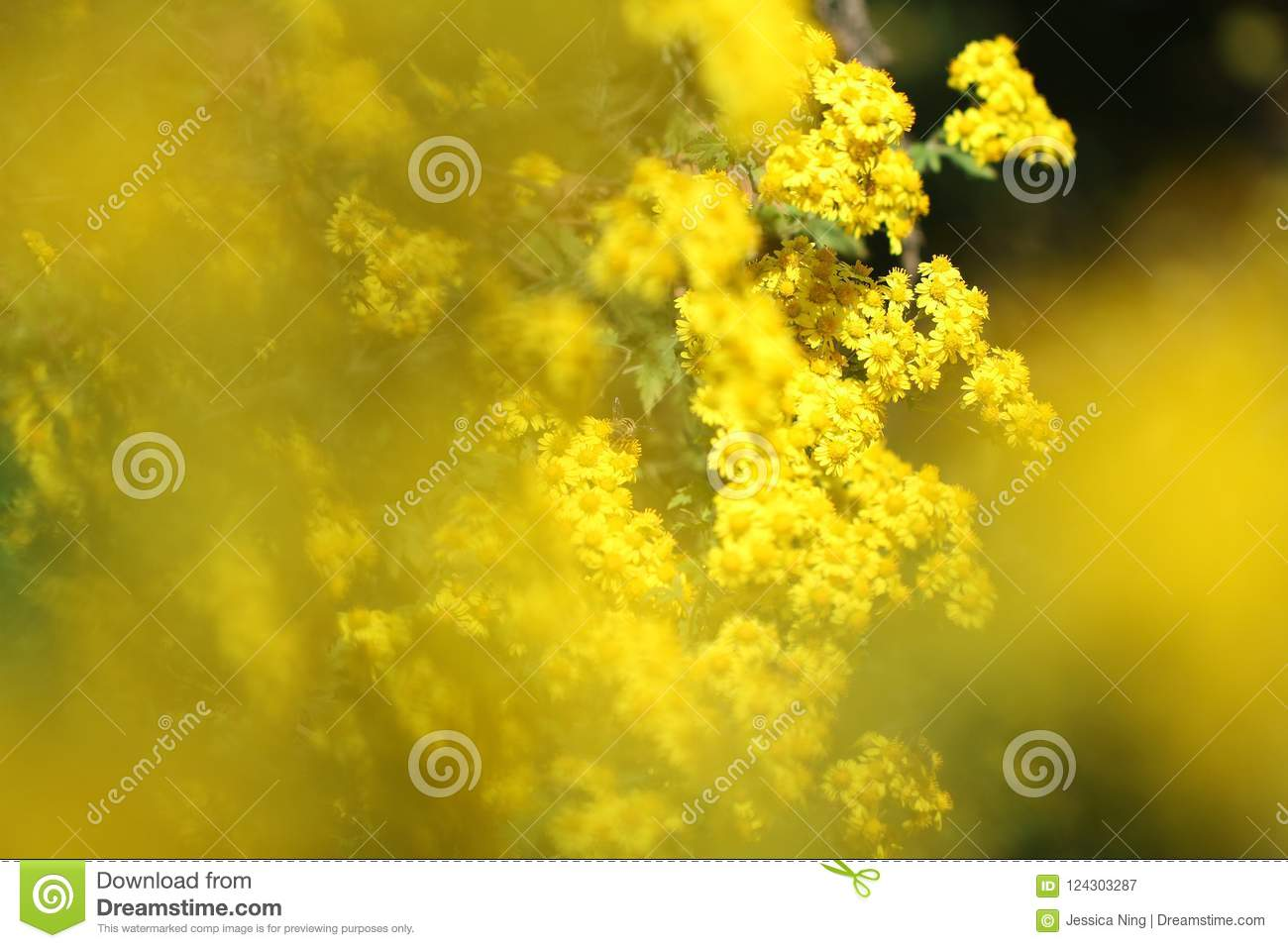 Brilliant wild yellow little daisy flowers in autumn stock image download brilliant wild yellow little daisy flowers in autumn stock image image of flower izmirmasajfo