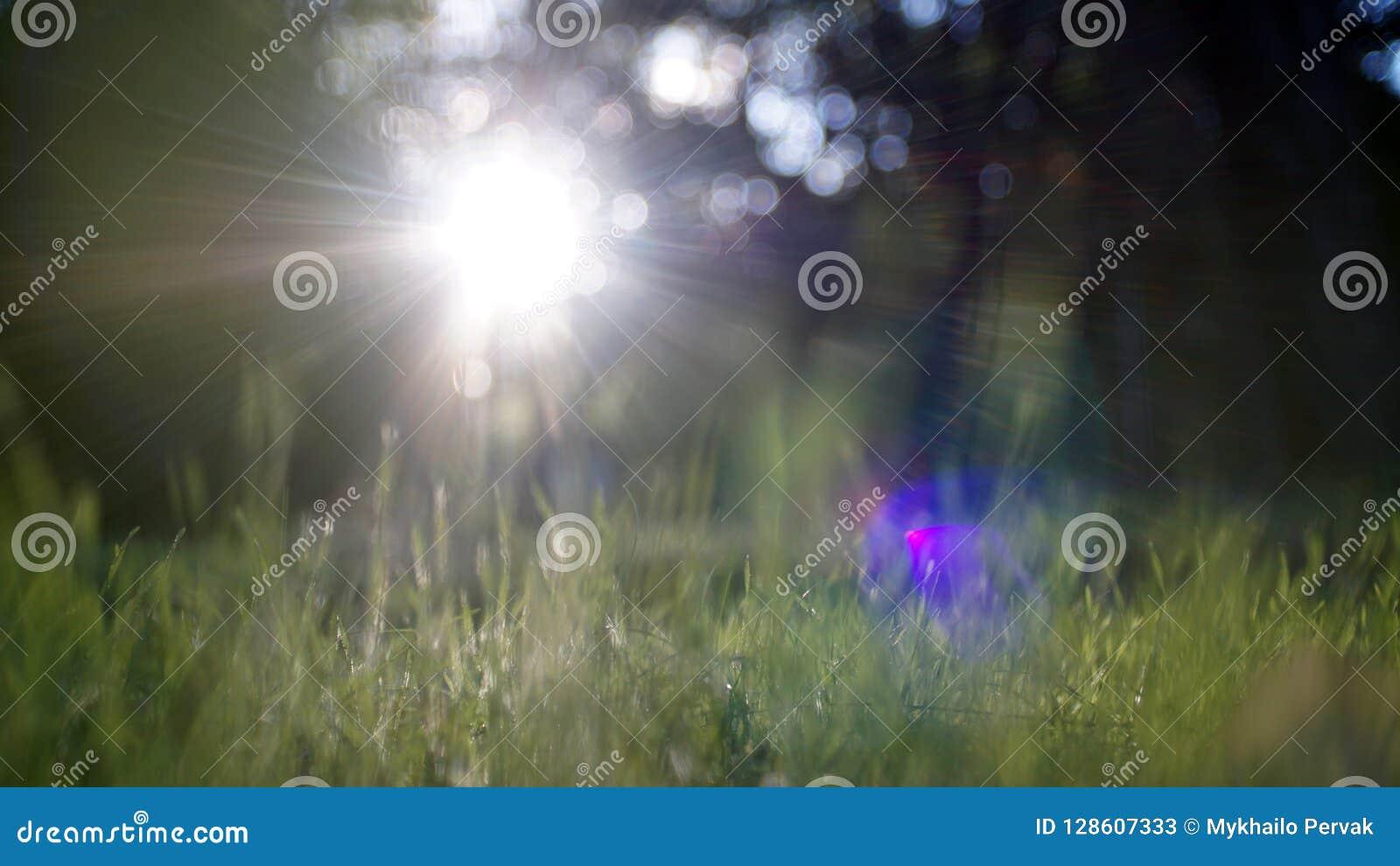 Brillo asombroso de la luz del sol durante puesta del sol con la hierba verde como fondo de la naturaleza wide