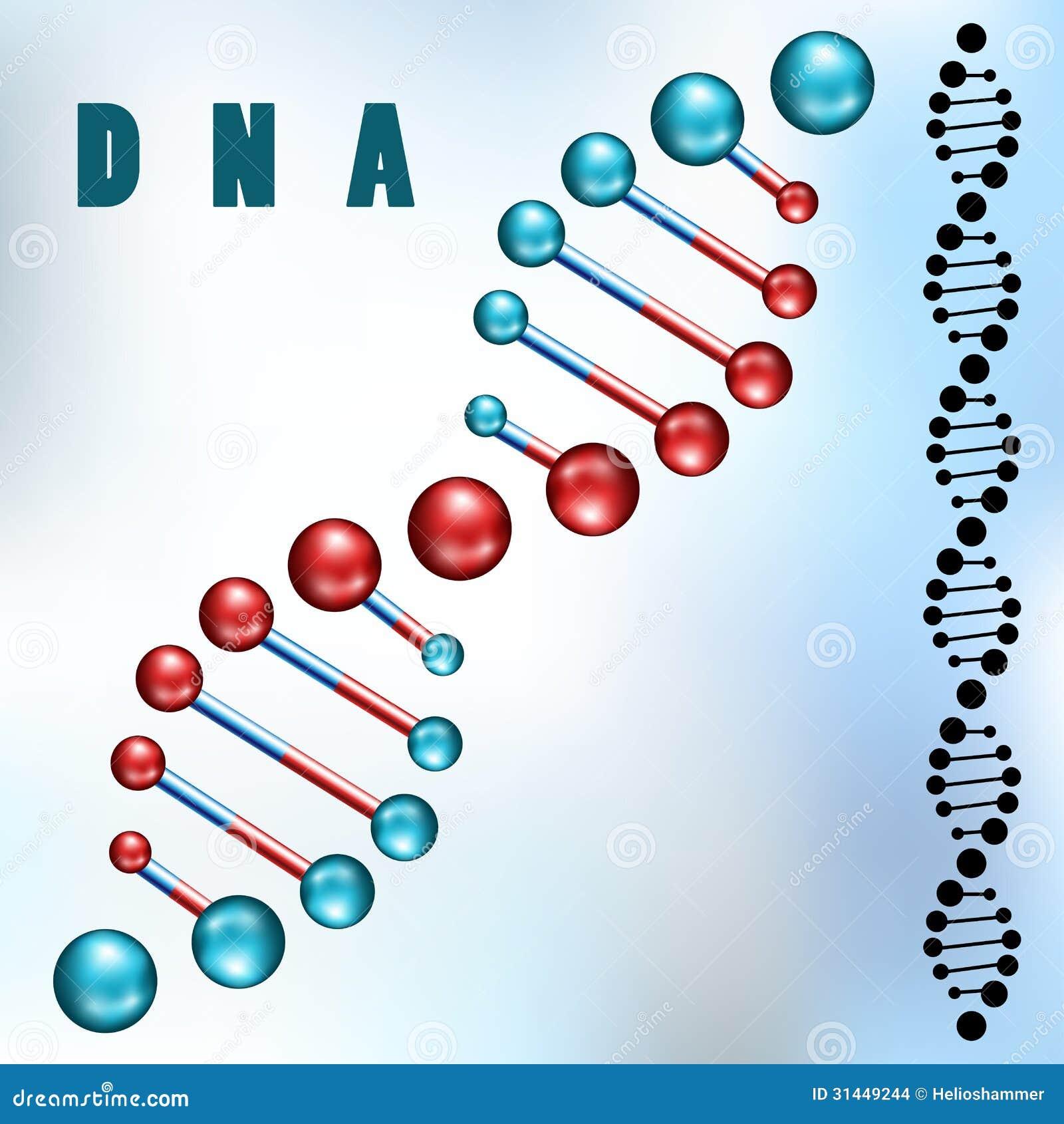Brin d ADN