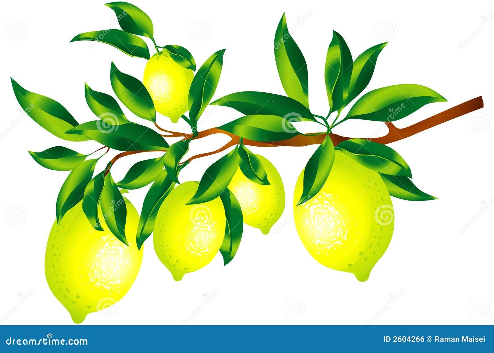 Brin des citrons