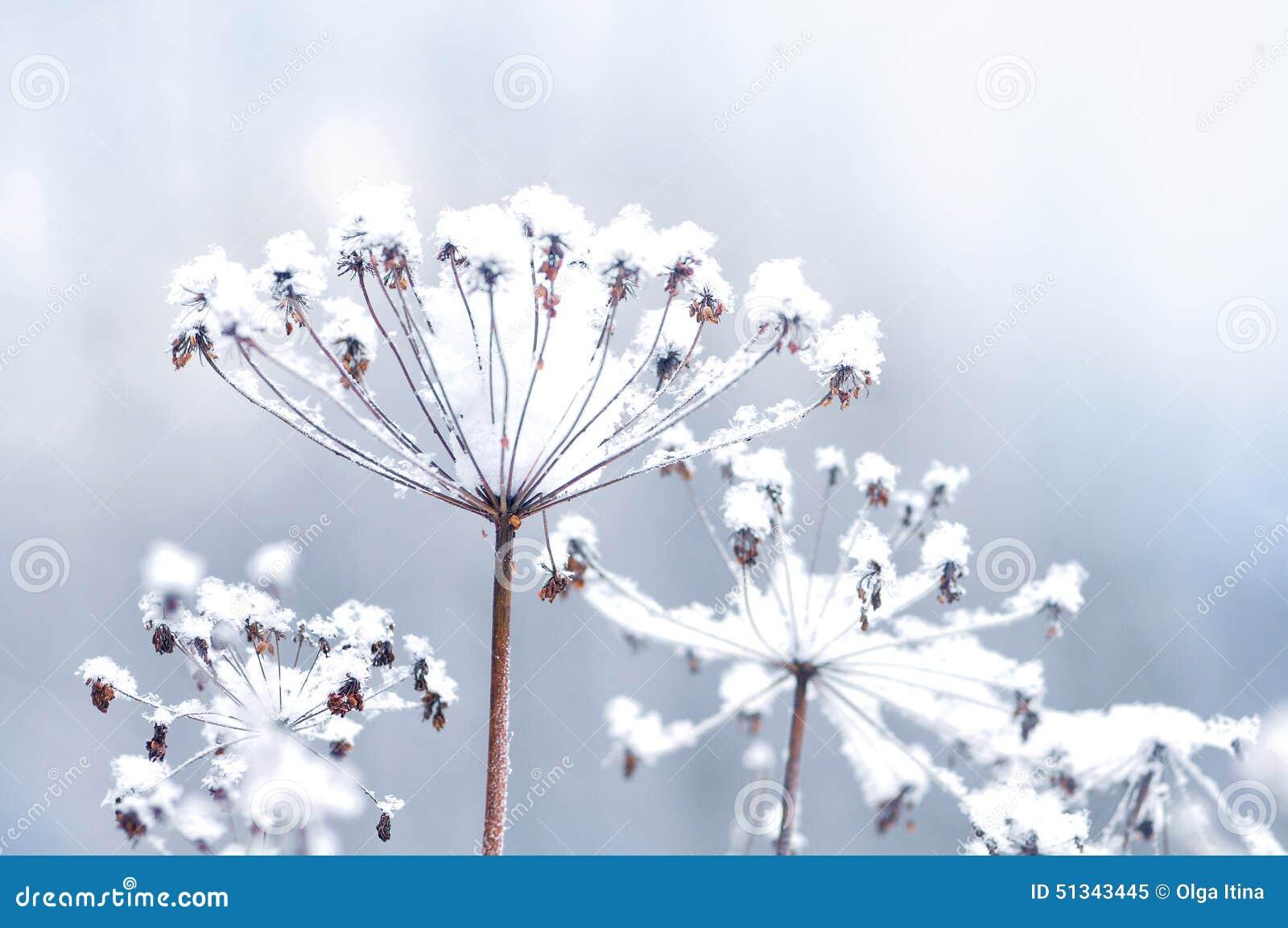 Brindille congel e de fleur au bel arri re plan de chutes de neige d 39 hiver image stock image - Fleur d hiver exterieur ...