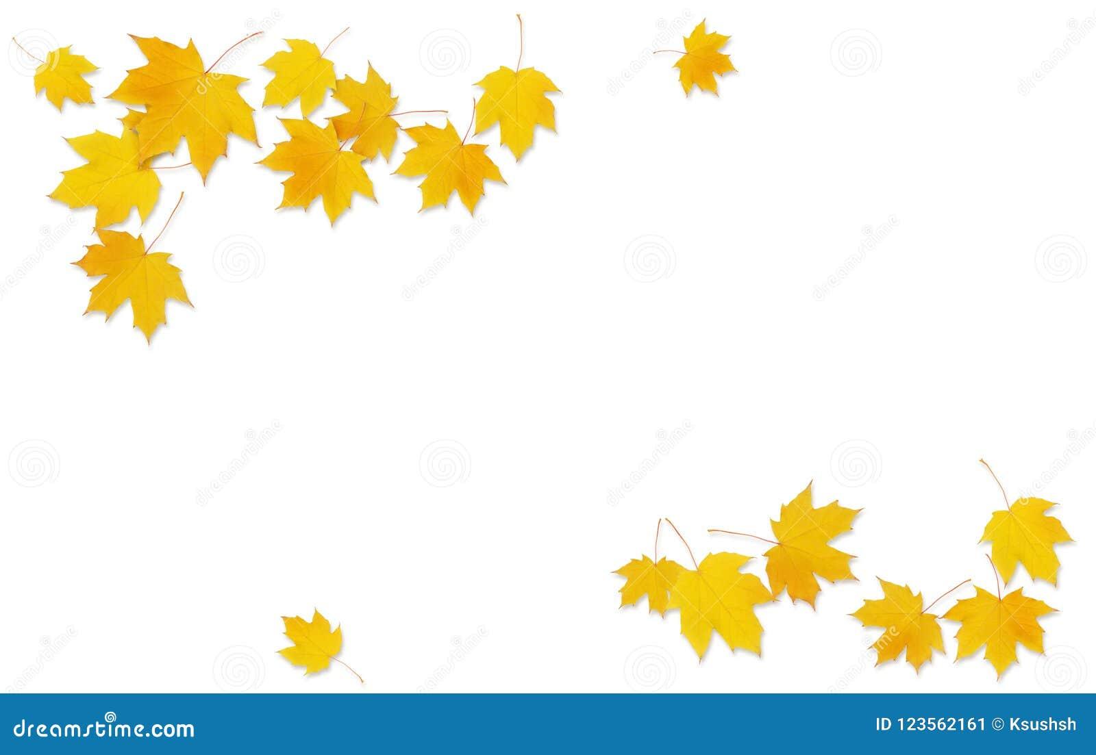 Brindille d érable d automne avec les feuilles jaunes
