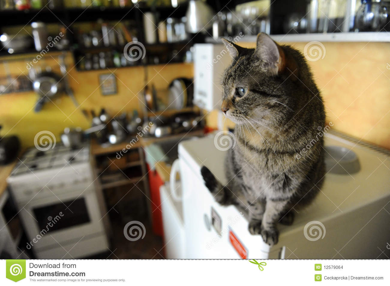 The Brindle Cat In The Kitchen Stock Photo Image Of