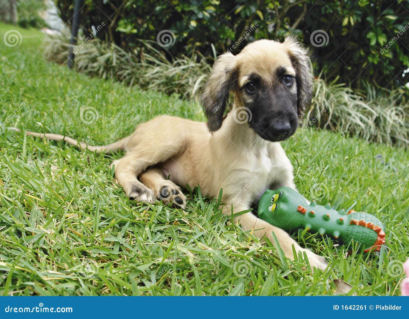 Brinquedo do filhote de cachorro do galgo afegão