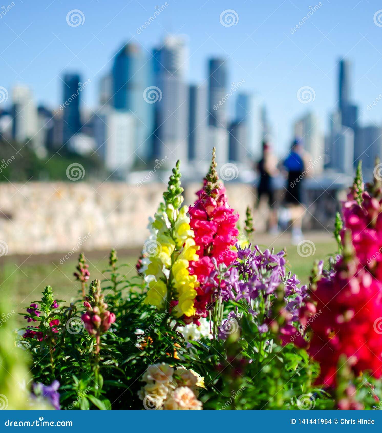 Brisbane miasta biegacz