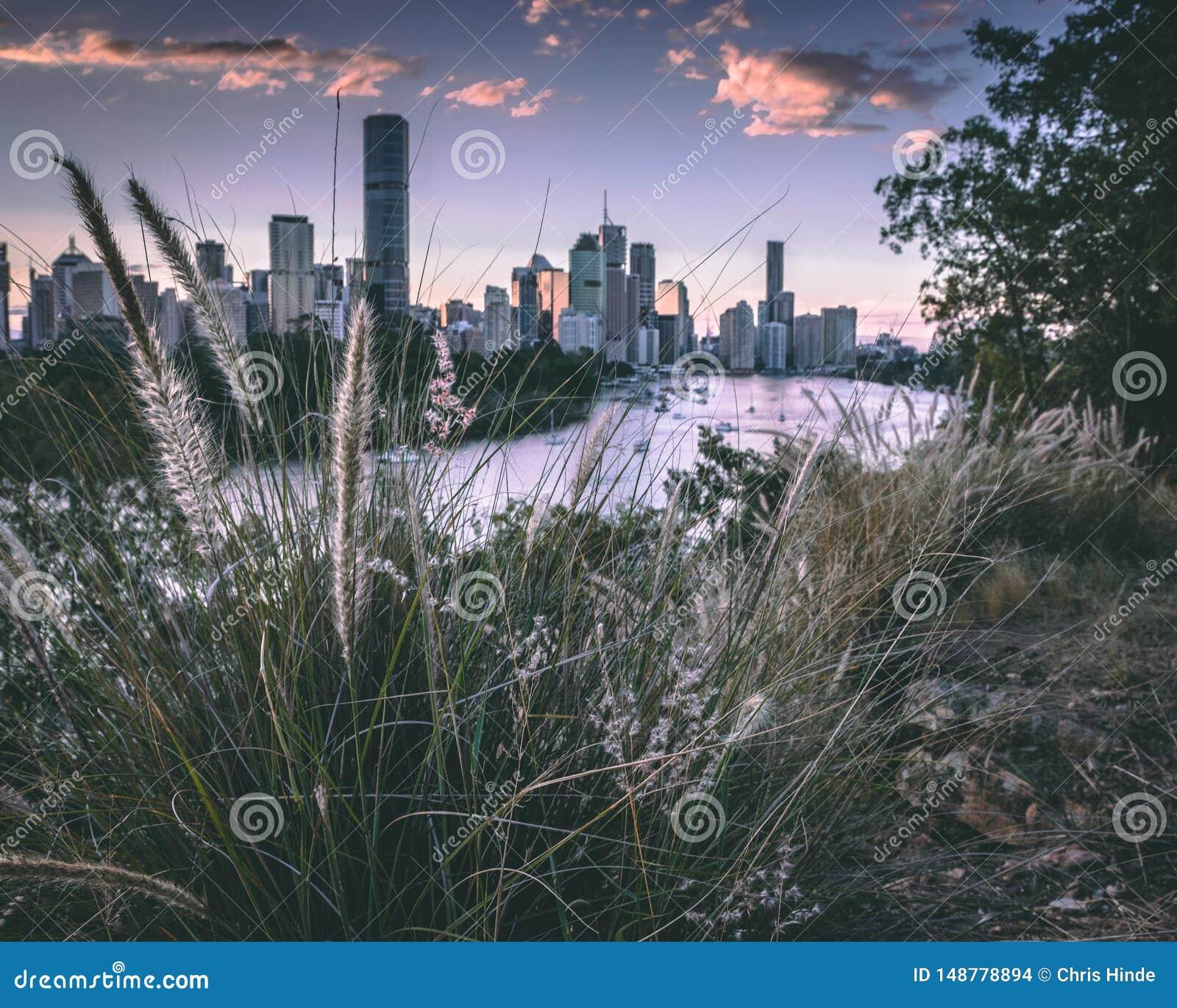 Brisbane nel verde
