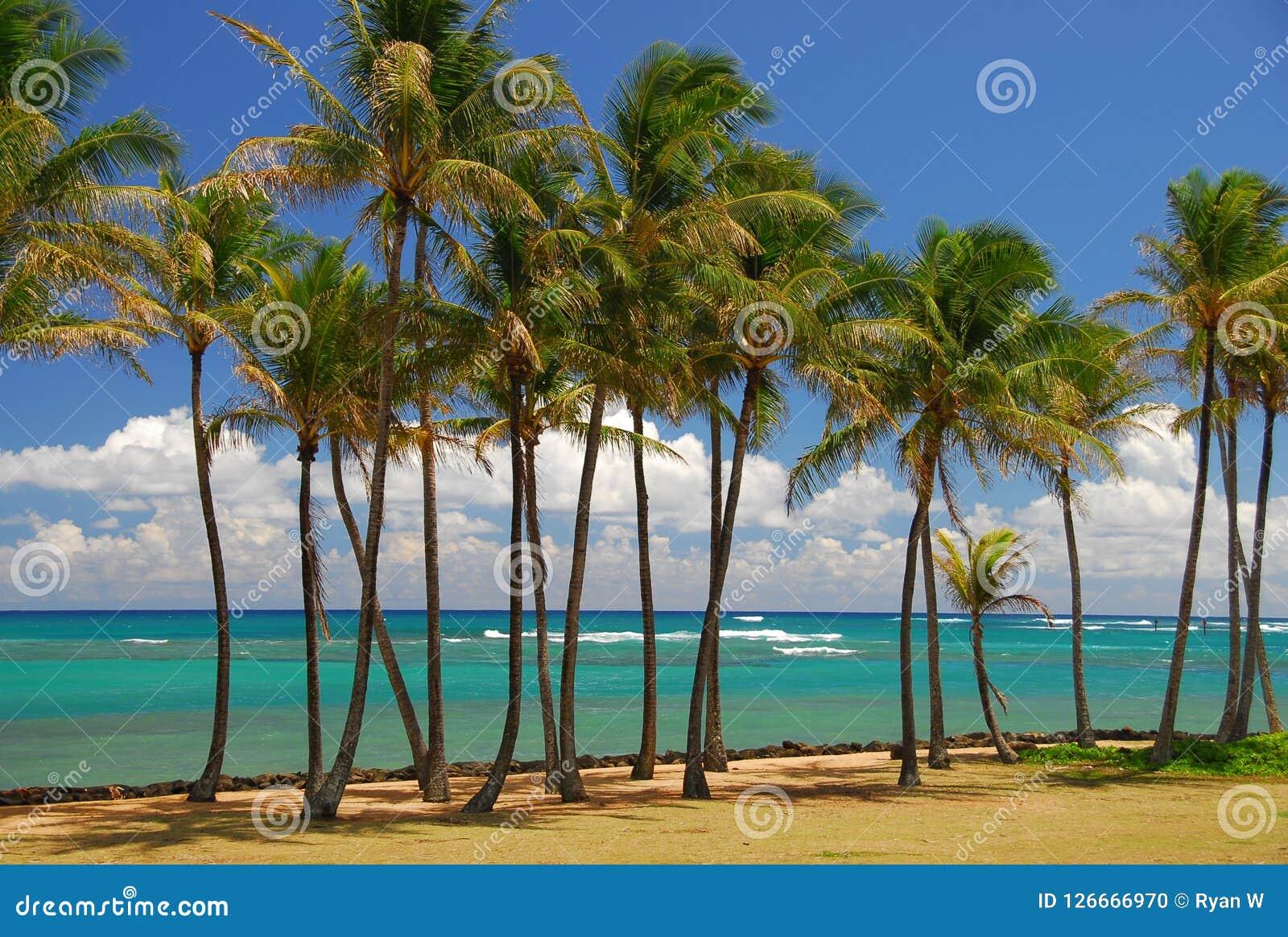 Brises tropicales parmi des palmiers dans Kauai
