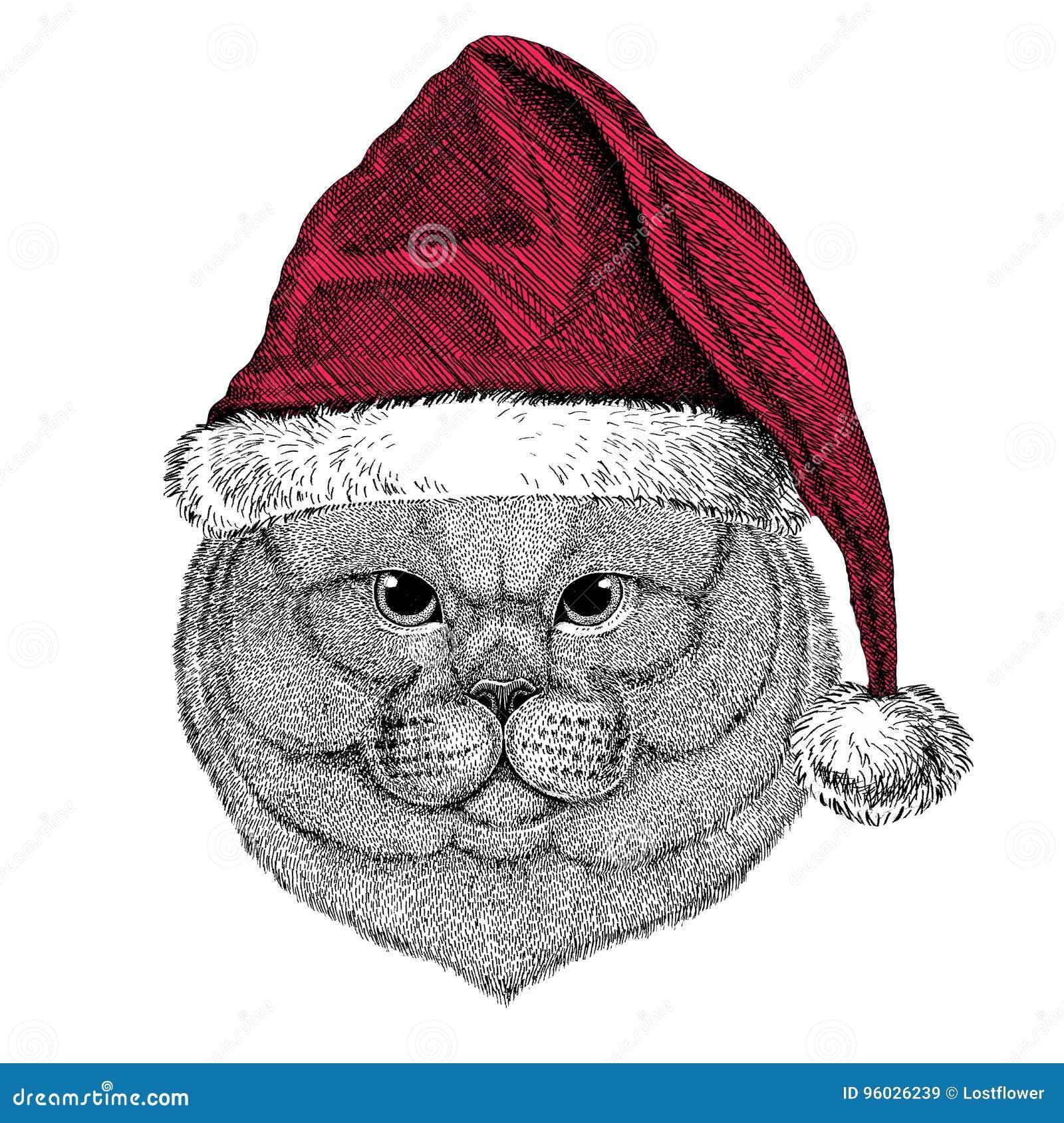 Brithish szlachetnego kota Męski Bożenarodzeniowy ilustracyjny dzikie zwierzę jest ubranym bożego narodzenia Santa Claus zimy kap
