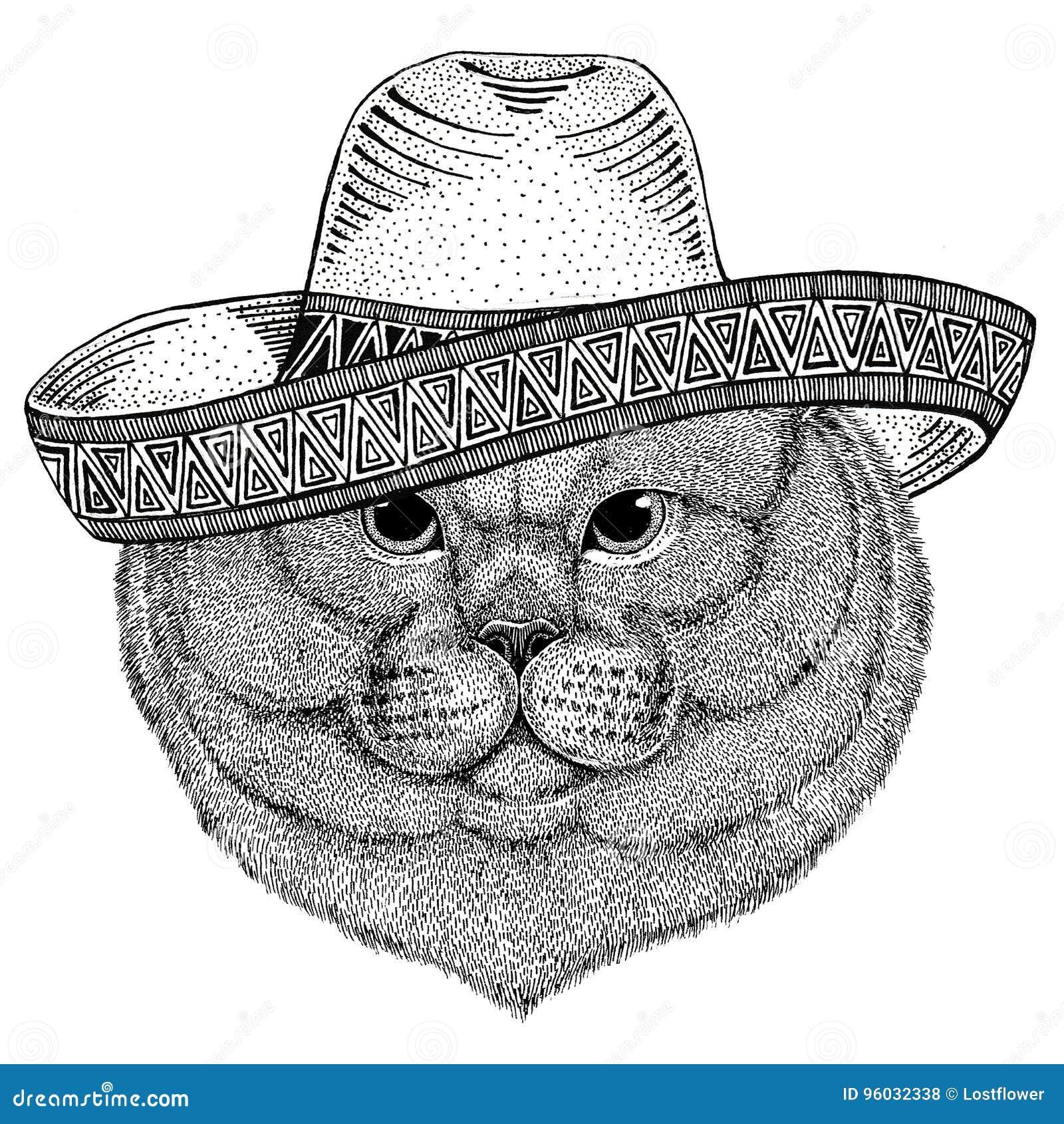 Brithish szlachetnego kota Męski dzikie zwierzę jest ubranym sombrero Meksyk fiesta meksykanina przyjęcia ilustracyjnego Dzikiego
