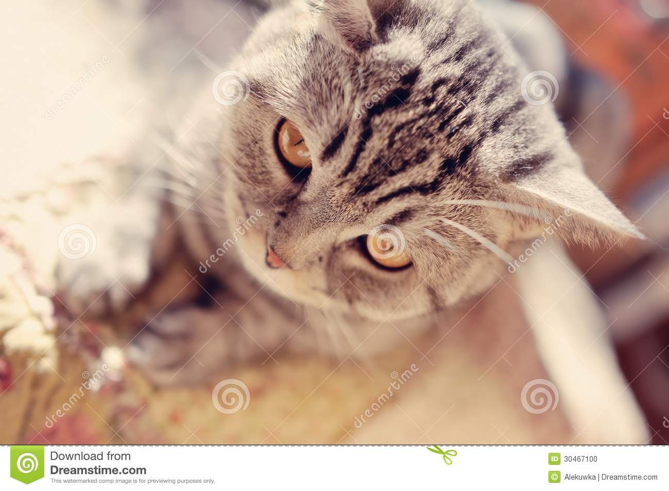 different types of worms in cats