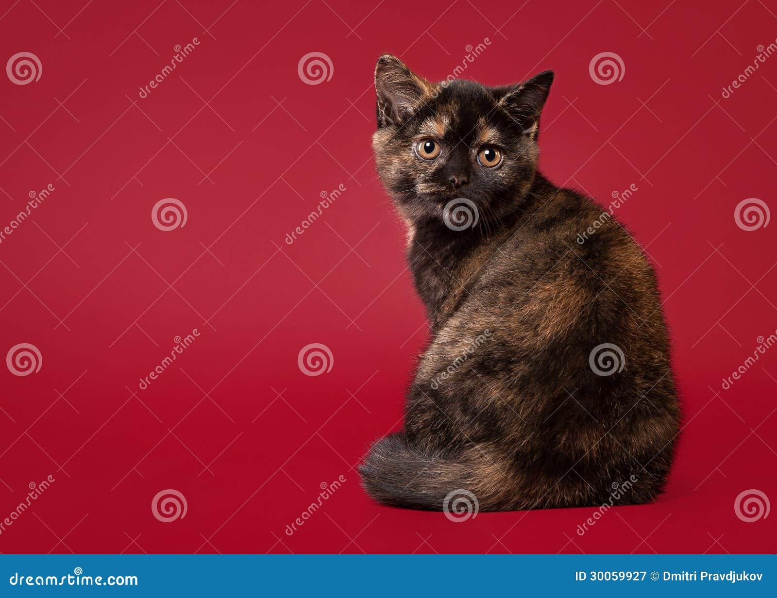 cat skin tag