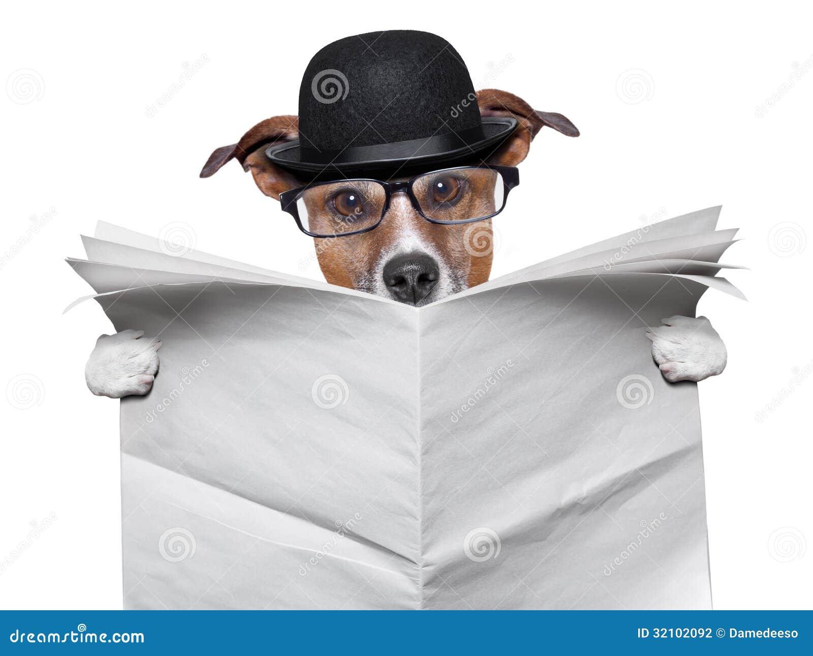 british dog reading stock photo  image of journal  english