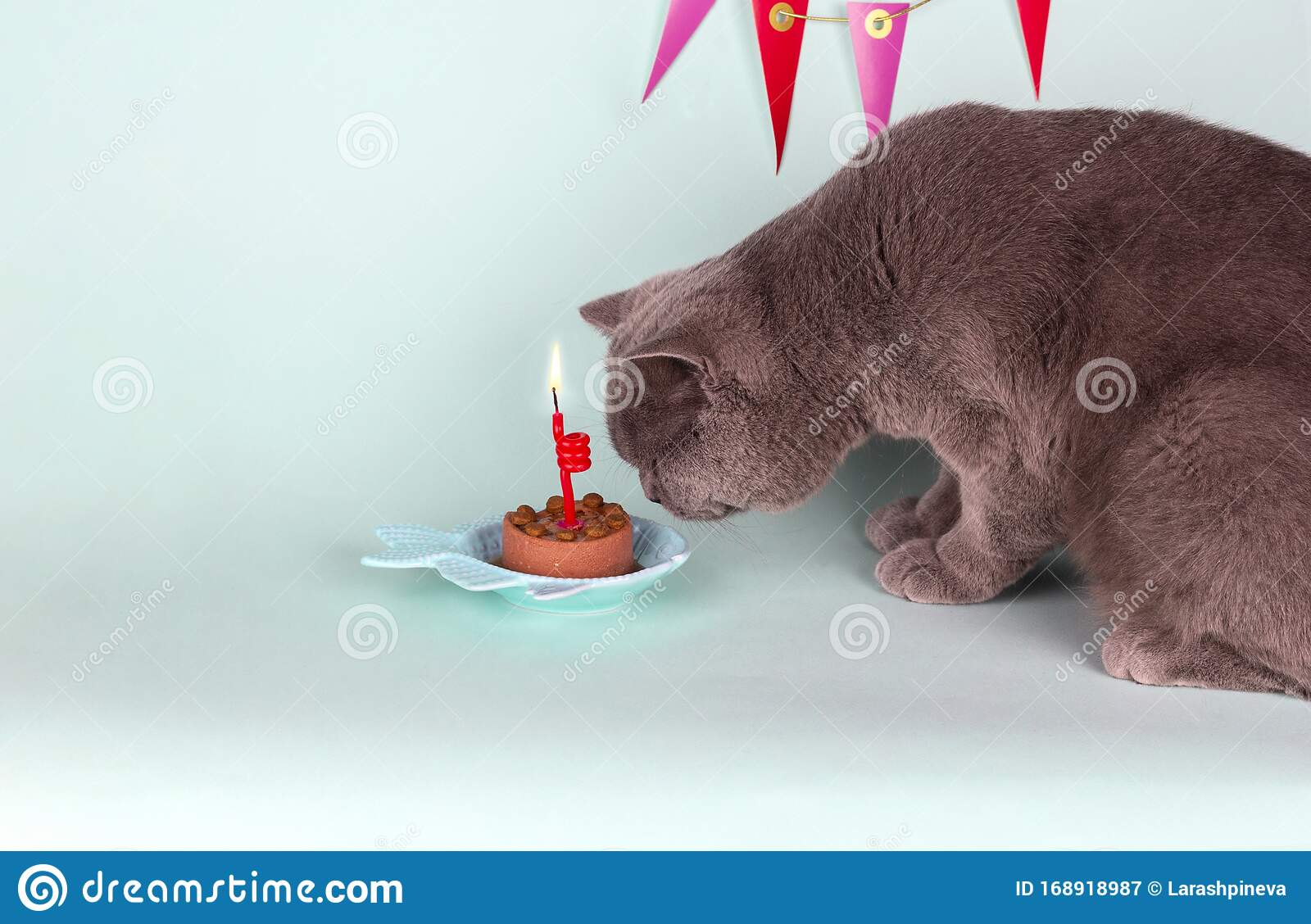 Terrific British Gray Cat Blows Out Candle On Cake On Light Blue Background Funny Birthday Cards Online Ioscodamsfinfo