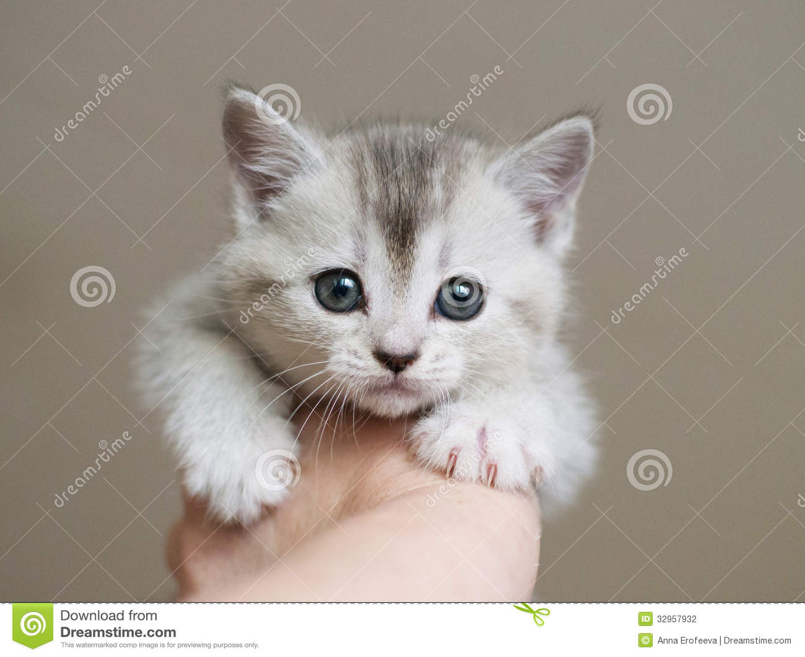 cat boarding san jose