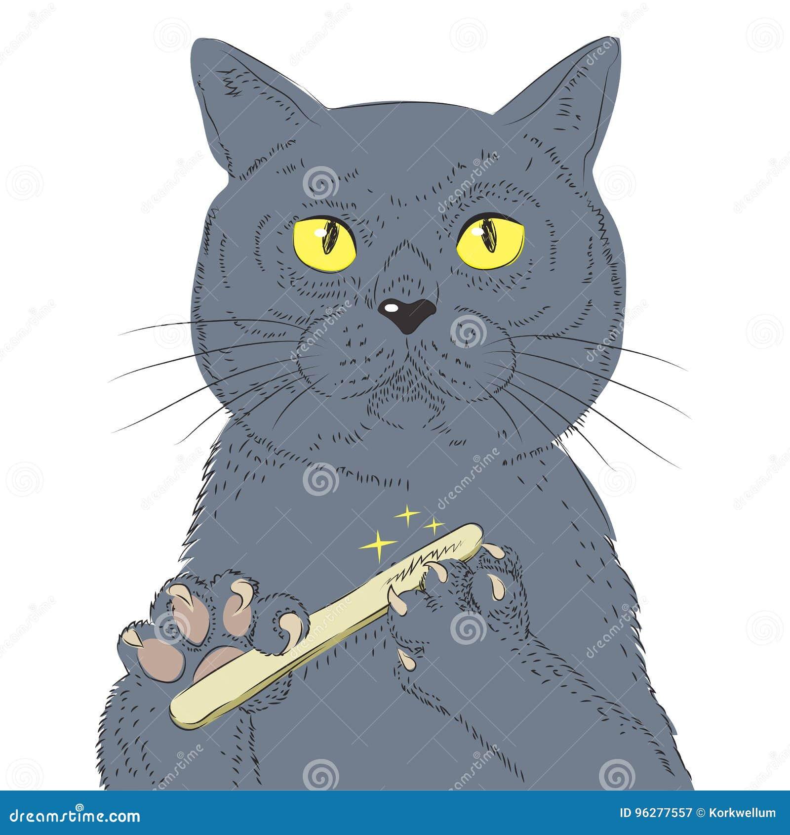 British Short Hair Cat Hand Draw Vector Sketch Illustration Of