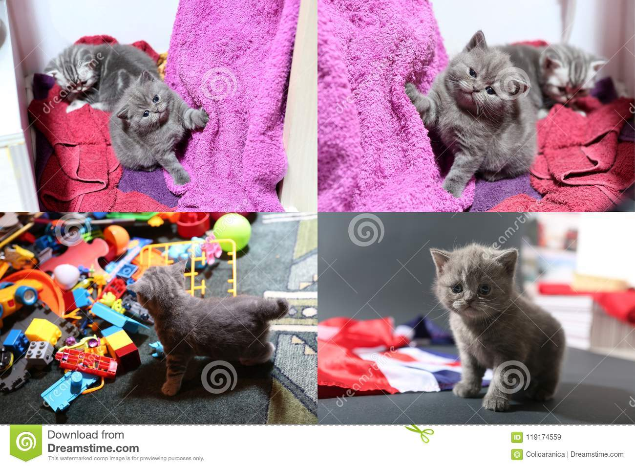 Baby kittens playing with toys and with Great Britain flag, multicam
