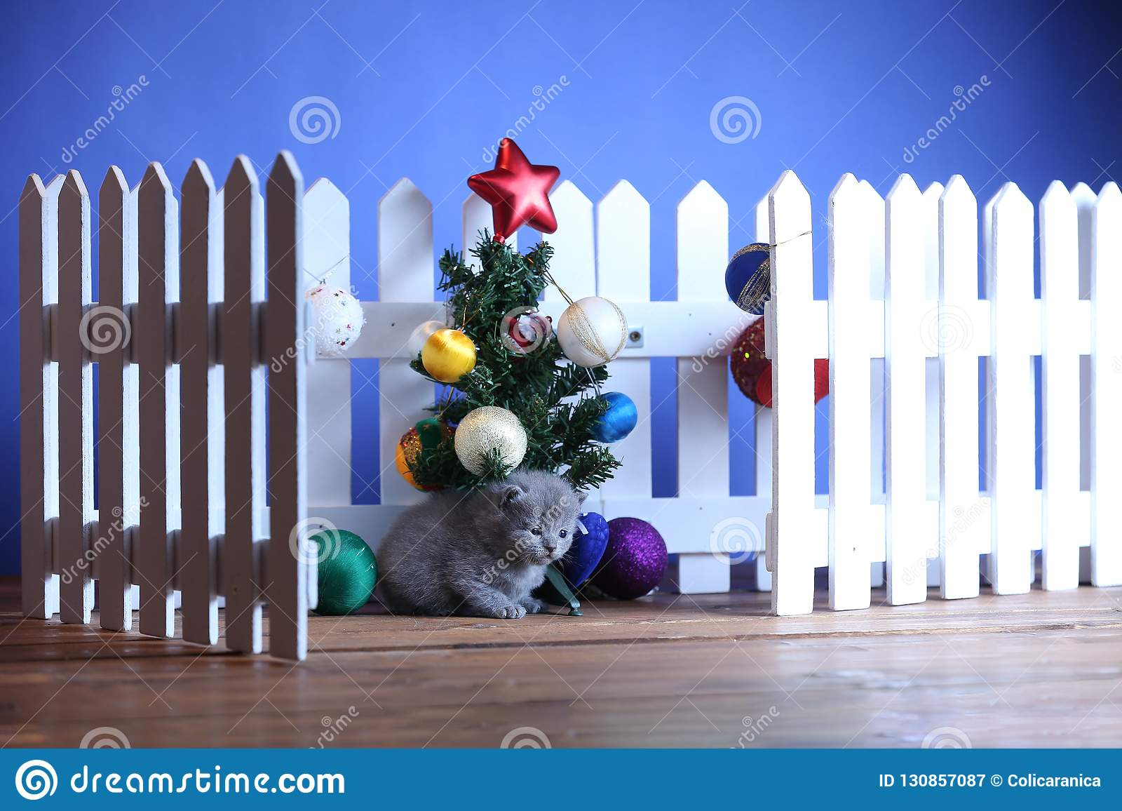 Small Kittens And Christmas Decorations Stock Image Image Of Small