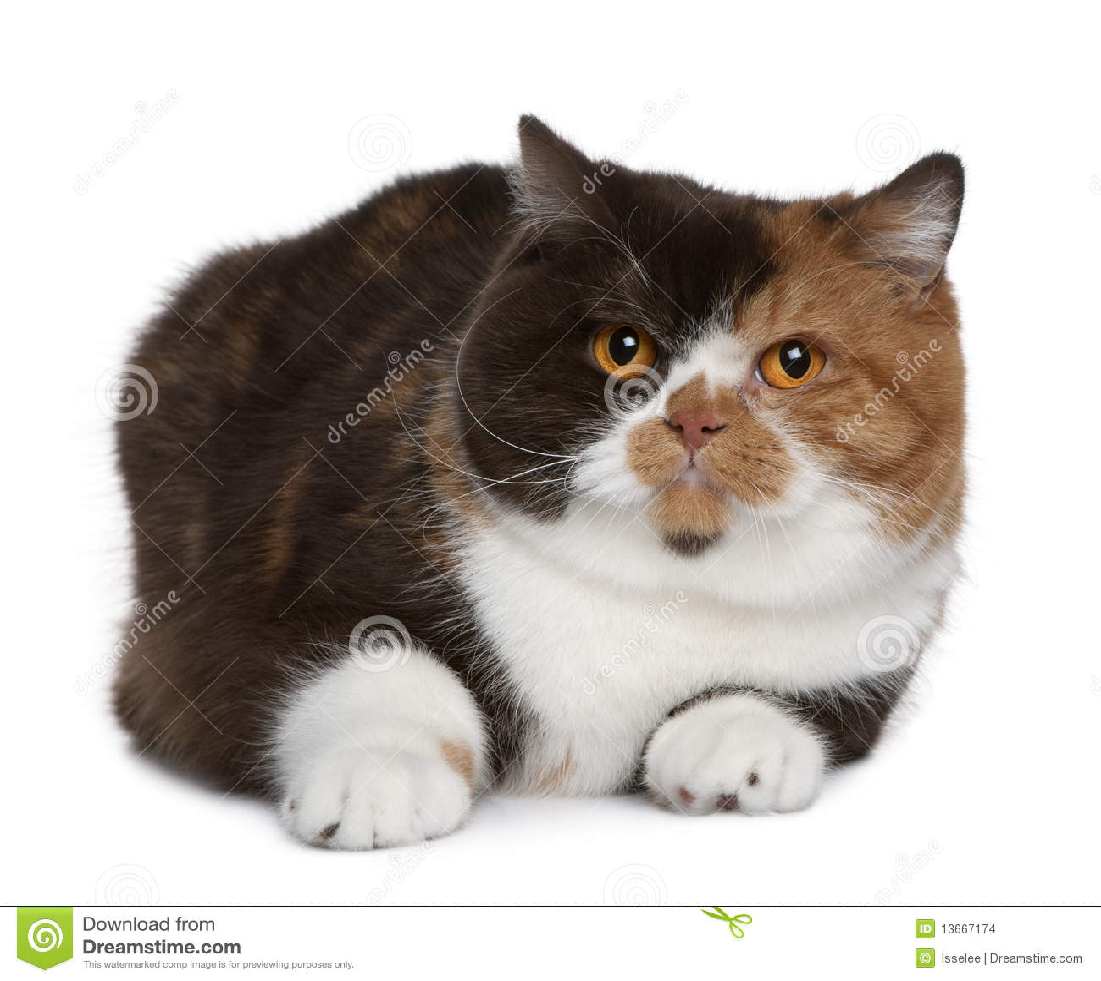 cat 1