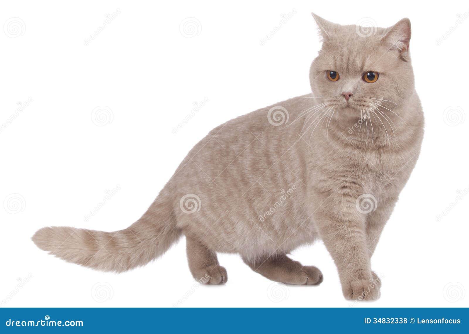 hop kitten