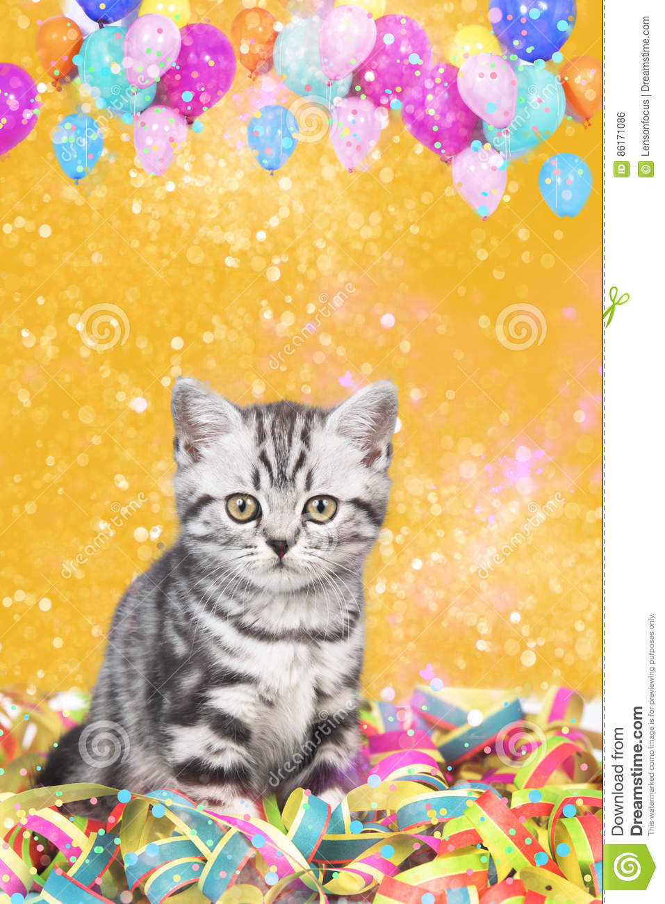 British shorthair cat with streamers