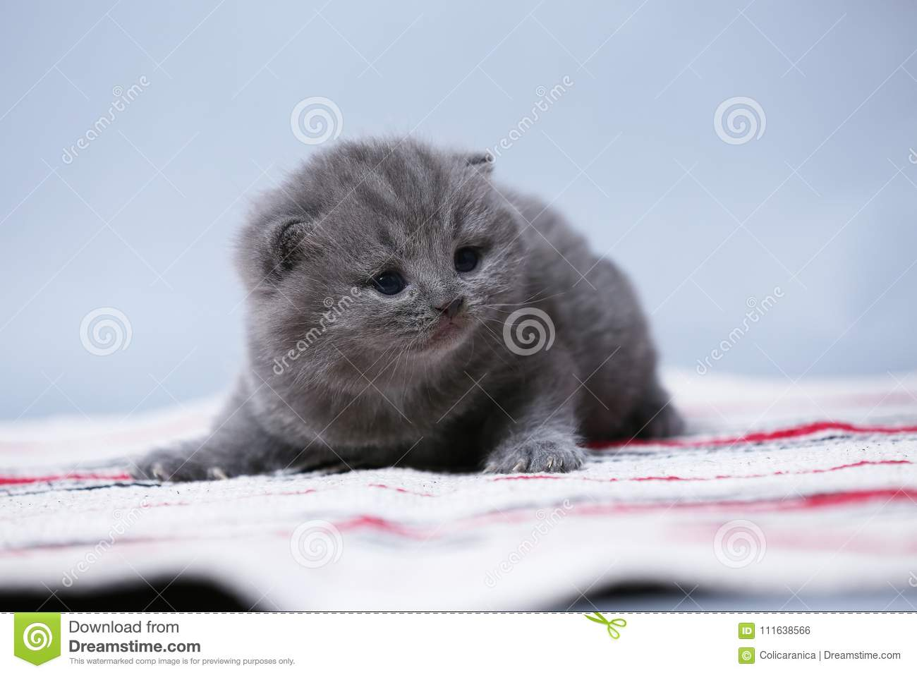 Kittens sitting on small carpet, cute face