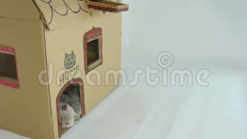 Cats Cardboard House Outdoor View Stock Video Video Of Boxes