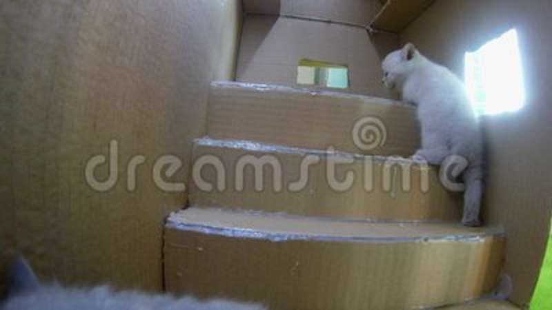 Cats Cardboard House Stock Footage Video Of Windows 109990624