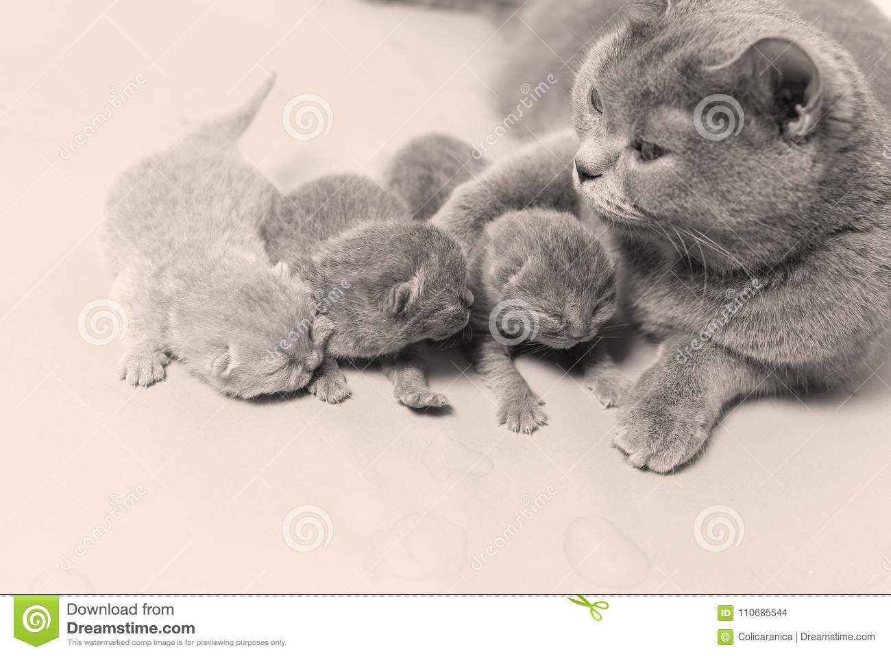 Cat takes care of kittens