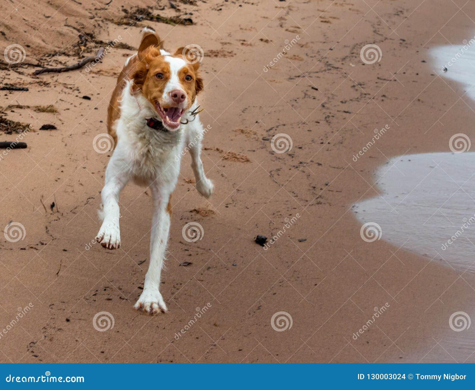 Brittany Running felice sulla sabbia della spiaggia di estate