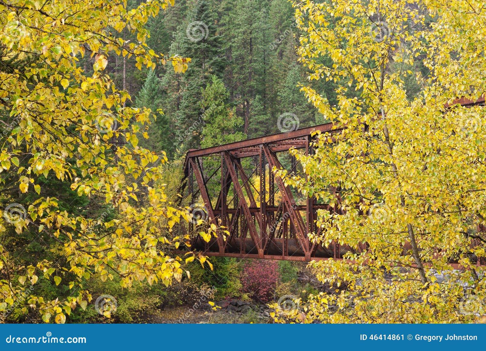 Bro mellan gula träd