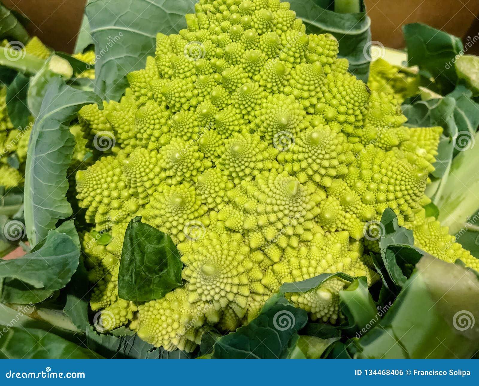 Broccoflower - de groene bloemkool van Romanesco Het goede spiraalvormige effect van Fibonacci Selectieve nadruk