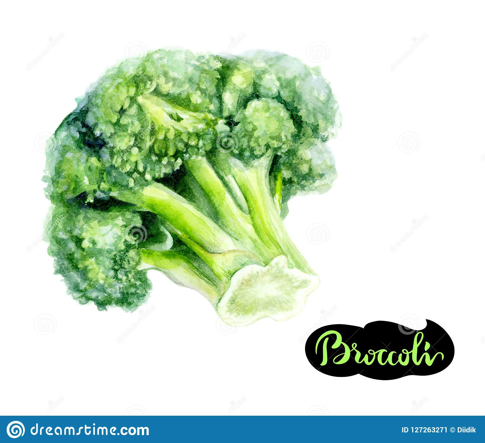 Broccoli watercolor hand drawn illustration isolated on white