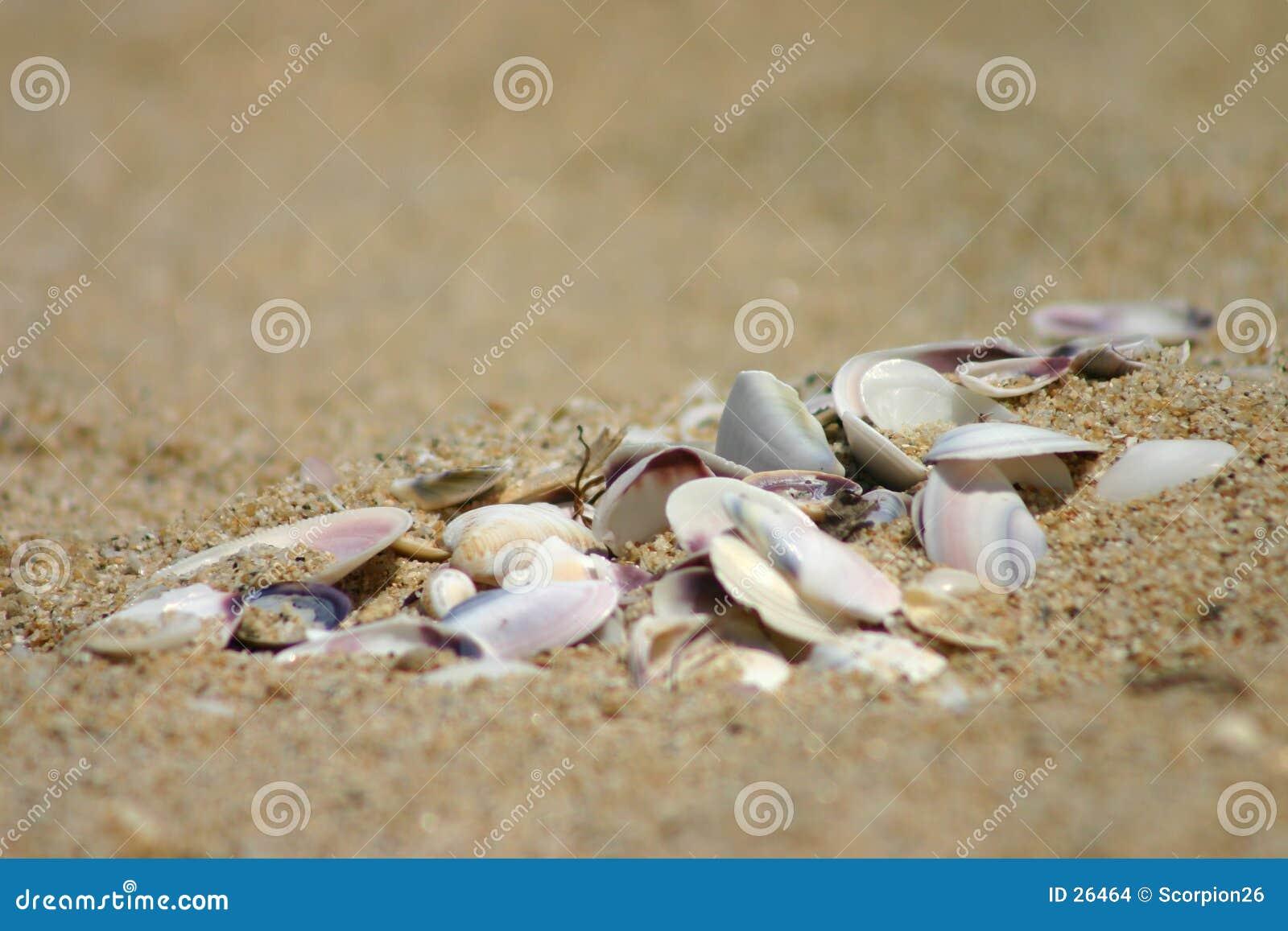 Broken mussels