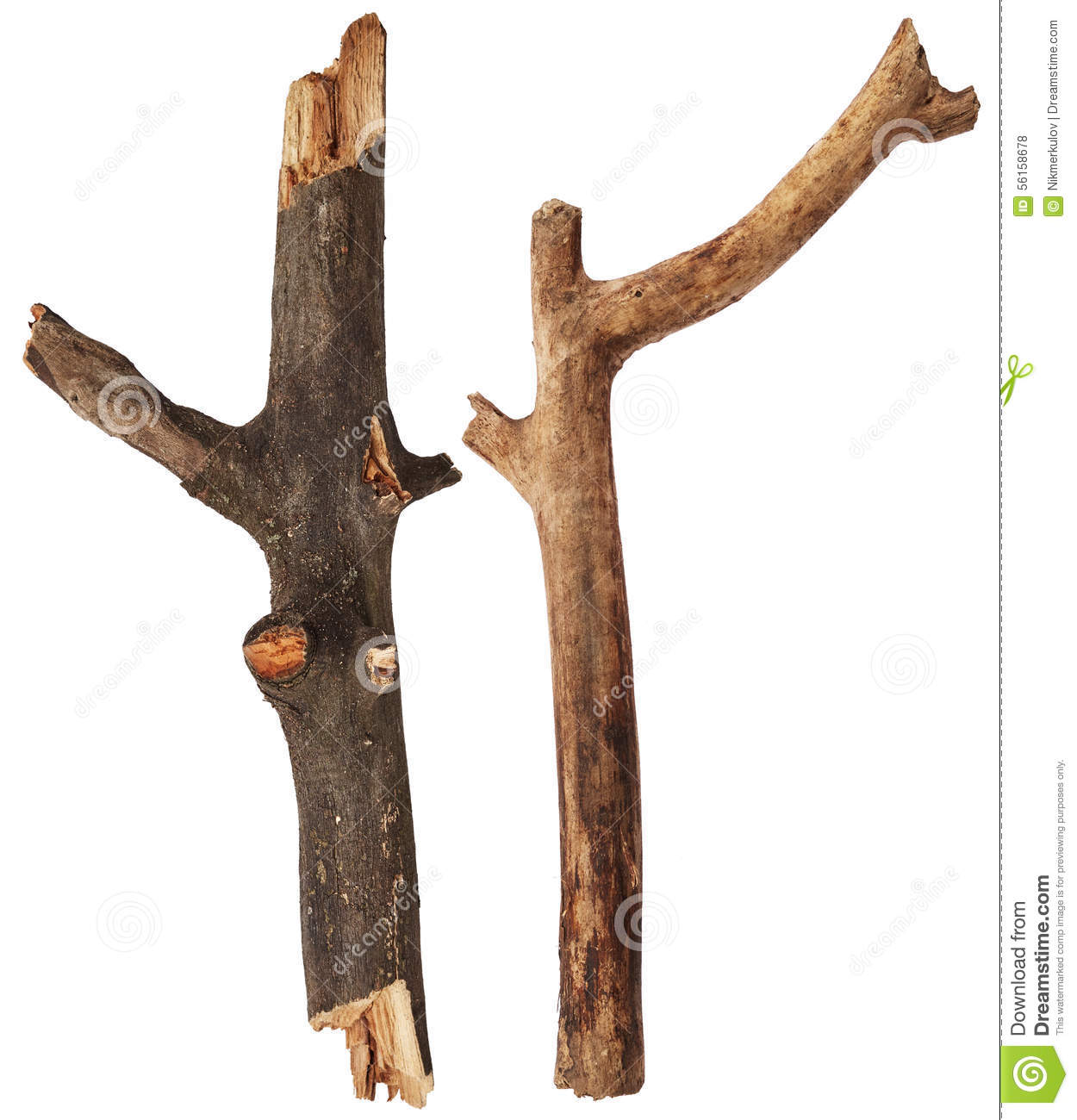 Broken Tree Branches Stock Photo - Image: 56158678