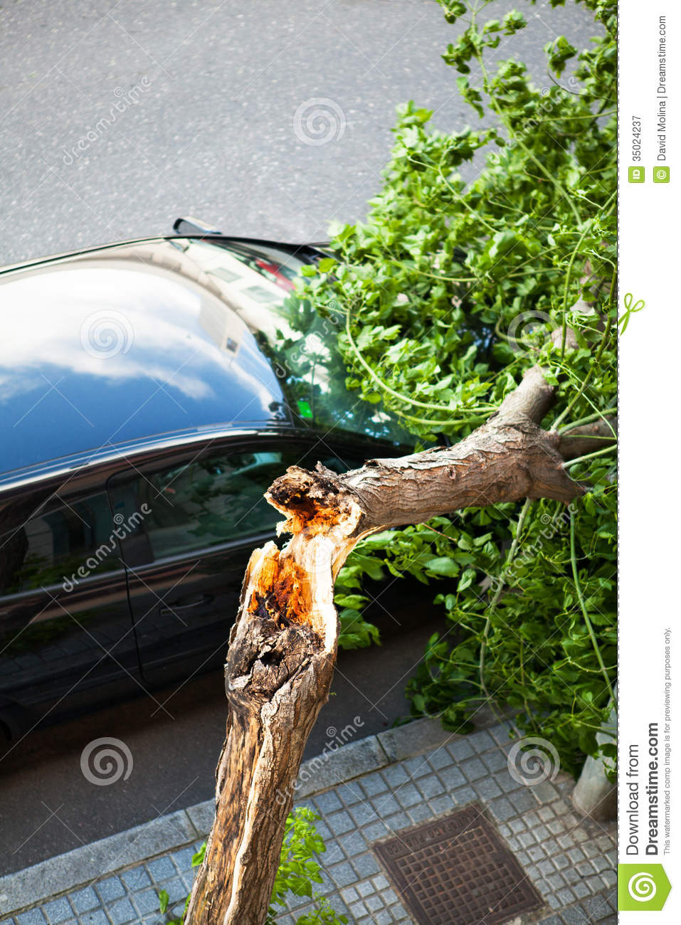 Broken Tree Over A Car After A Wind Storm Royalty Free