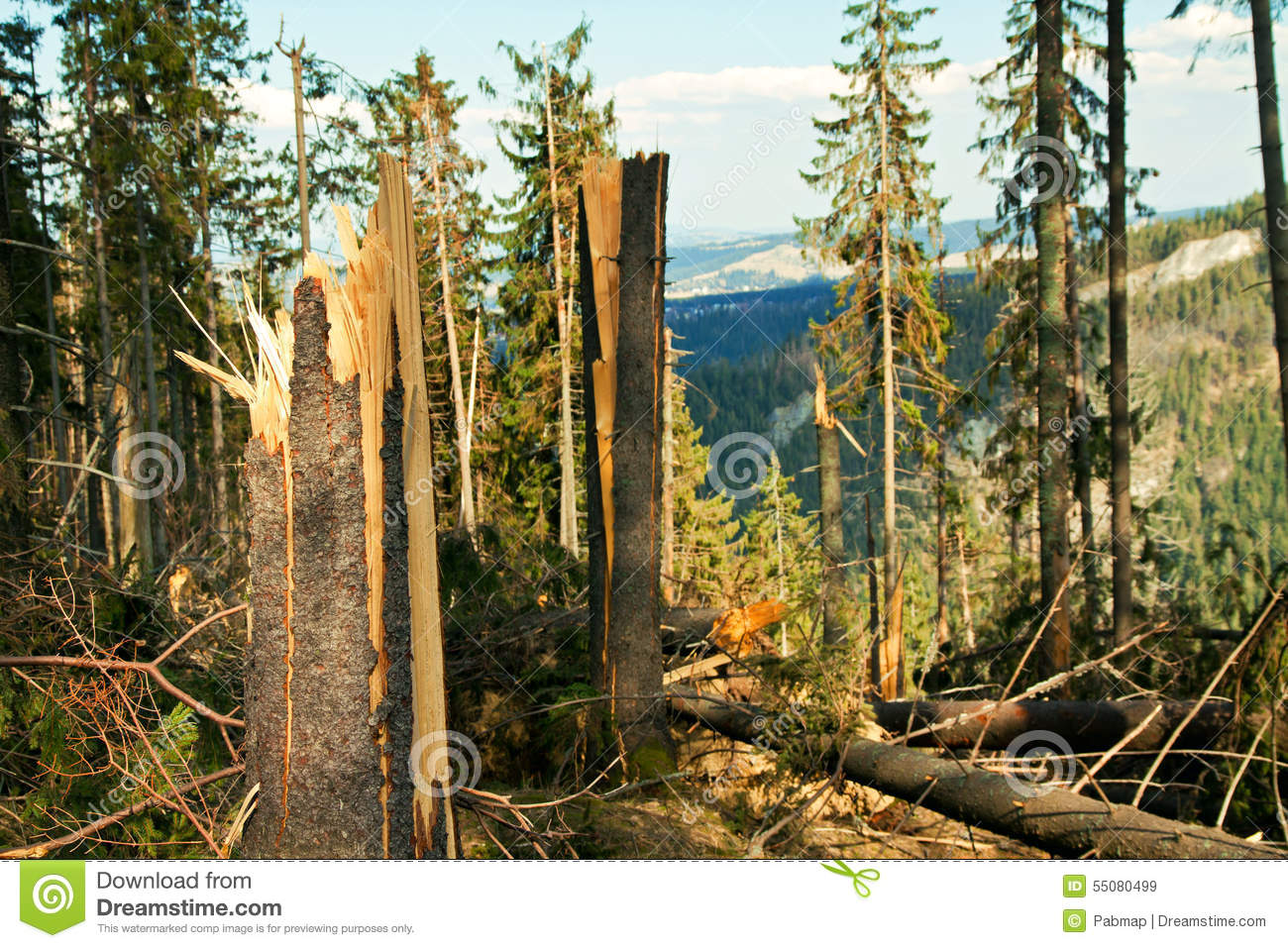 disaster in the forest ★★★ disaster movie trailer - 2017 guide to emergency survival in america @ disaster movie trailer @ watch free video now (recommended) - shenandoah forest.