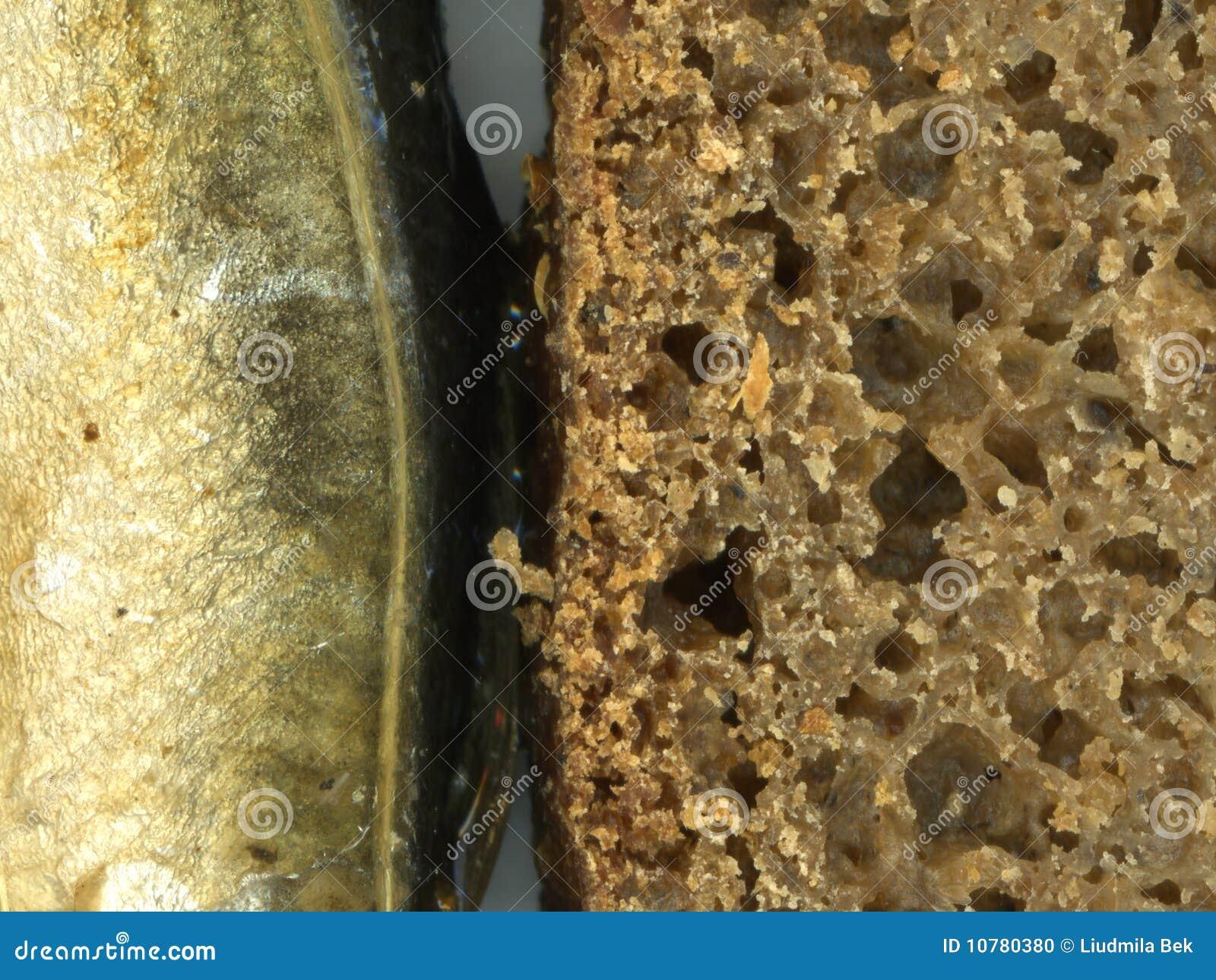 Brood en vissen
