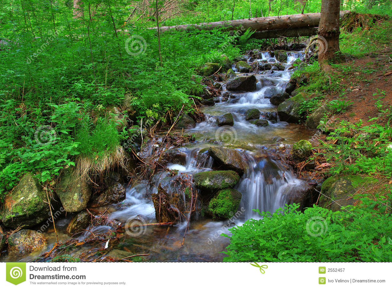 Brook In The Forest Royalty Free Stock Photography Image