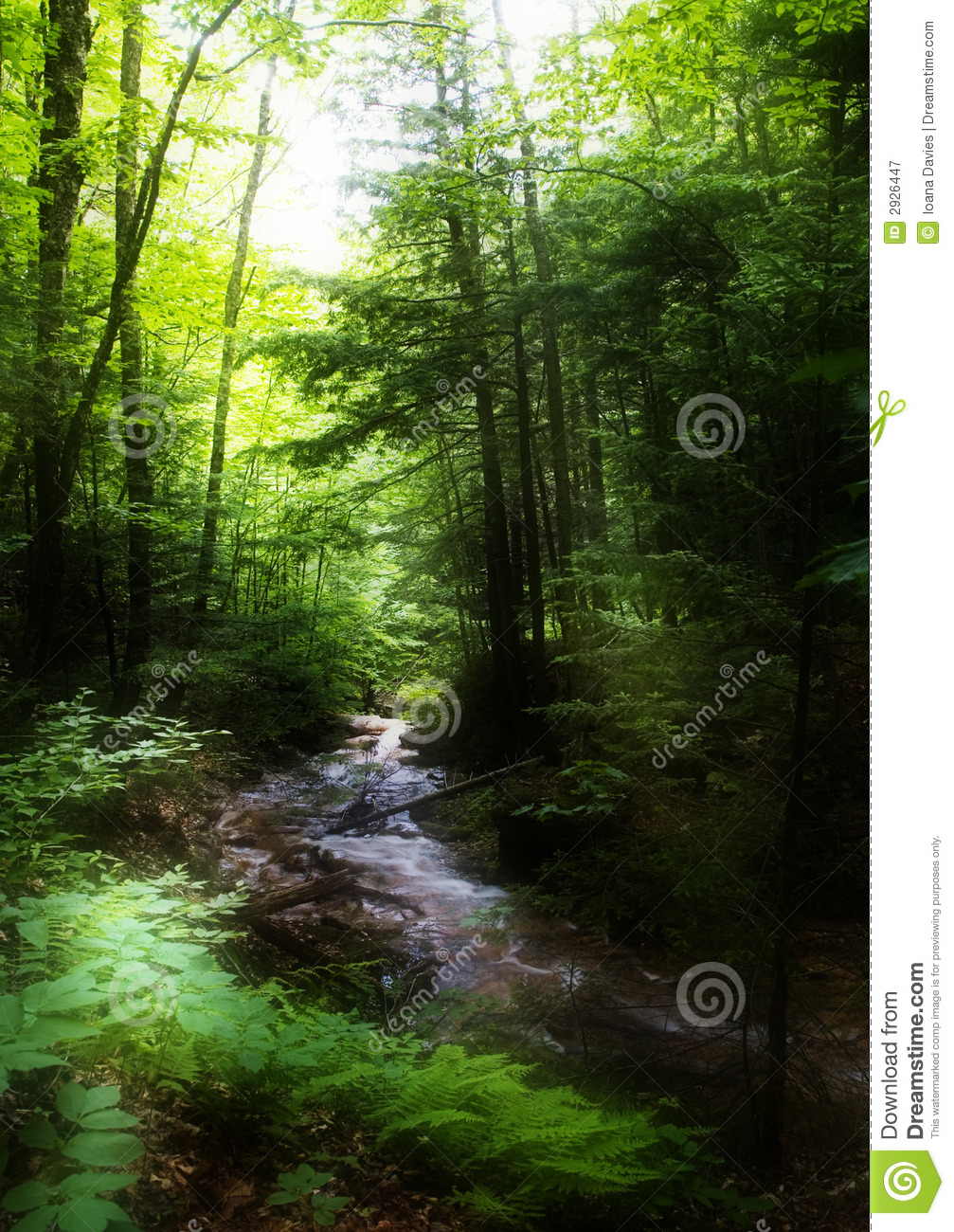 Download Brook in the forest stock image. Image of fern, green - 2926447