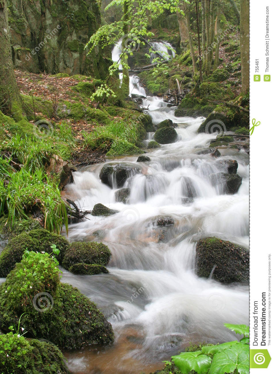 Brook in forest