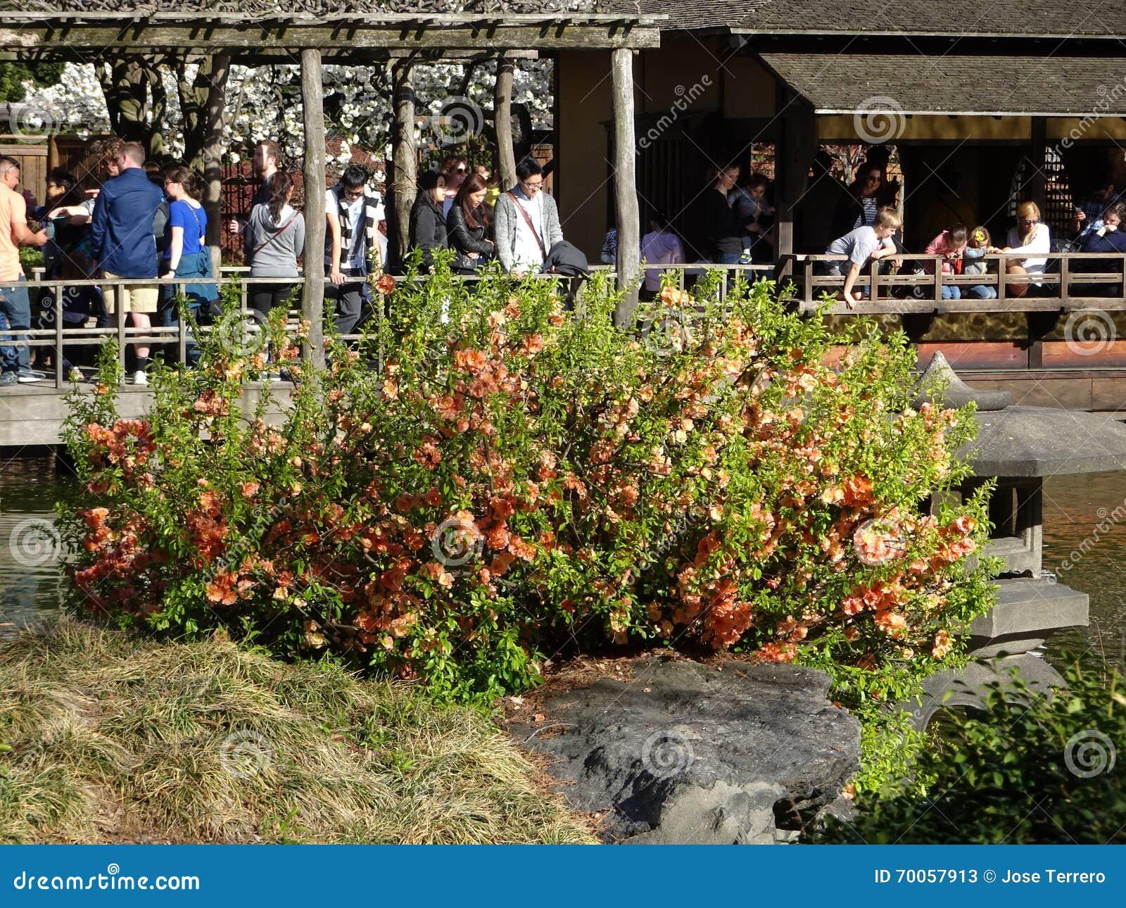 Brooklyn Botanic Garden April 2016 Part 3 39 Editorial Stock Photo Image Of Park Prospect