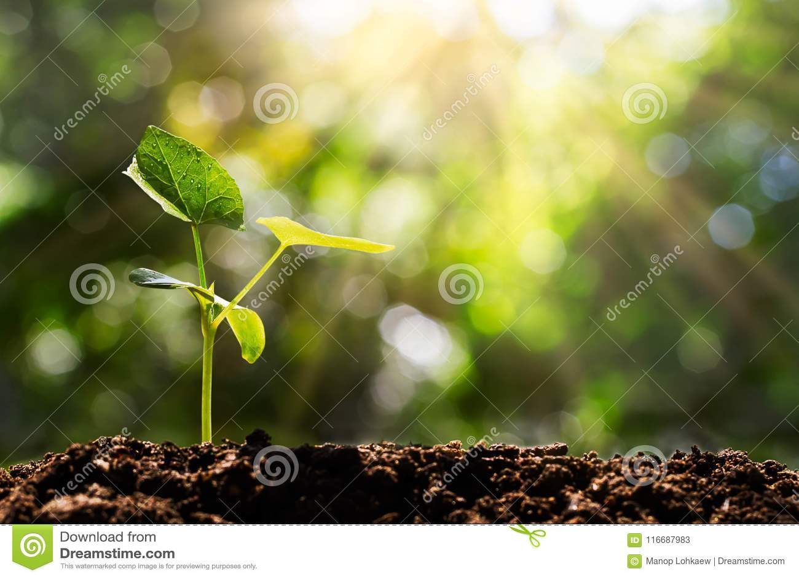 Brotar no bokeh verde borrado com fundo macio da luz solar